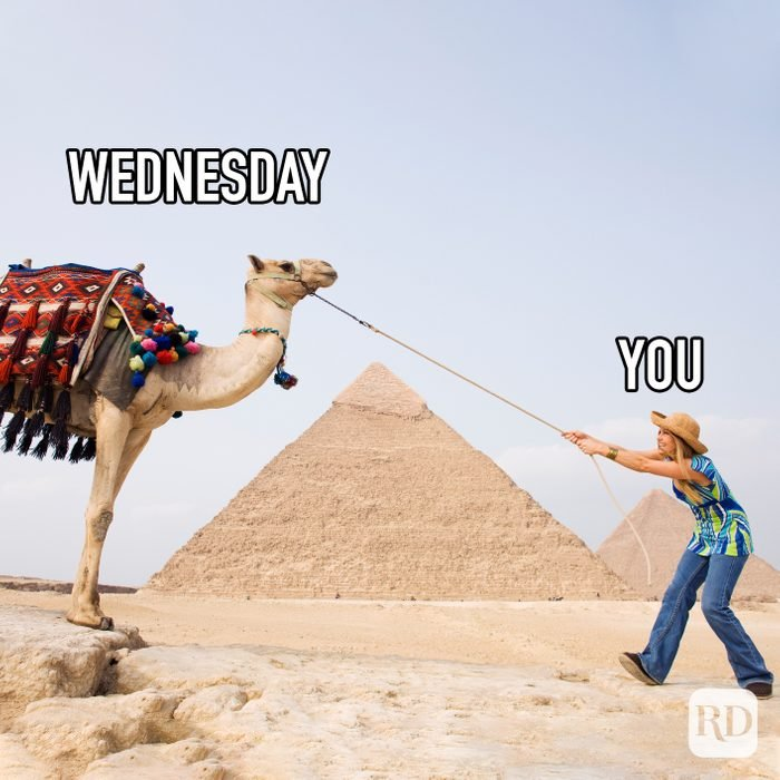 Wednesday Vs You meme text over image of woman pulling a camel on a lead