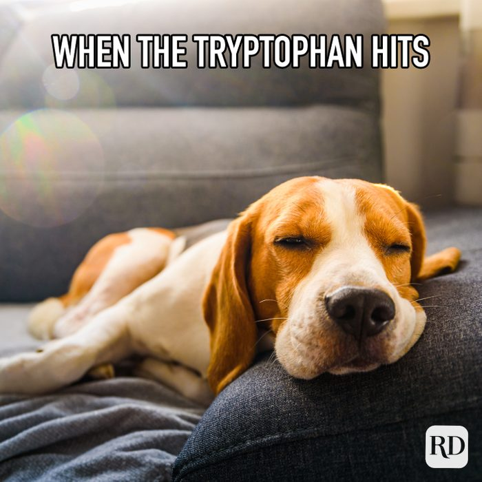 When The Tryptophan Hits meme text on image of dog sleeping