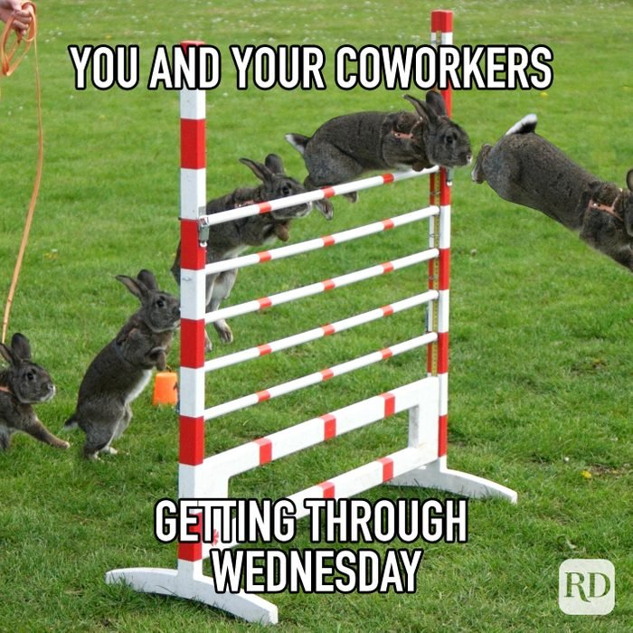 You And Your Coworkers Getting Through Wednesday meme text on image of rabbit's jumping over obstacle