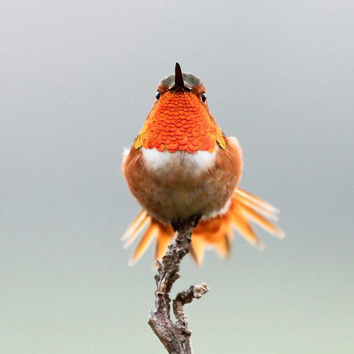 National Audubon Society Gift Membership