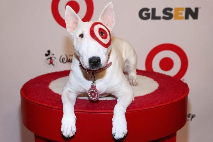 Bullseye The Target Dog sitting on a pedestal at a press event