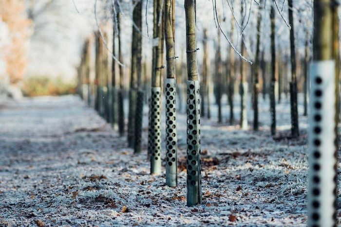 Metal Tree Guards around rows of trees