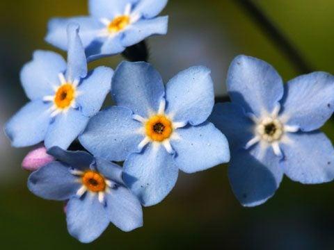 Nuestras flores perennes, arbustos y otras plantas de jardín Colección | Los jardines de Butchart