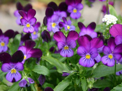 best flowers for garden design  reader's digest, Beautiful flower