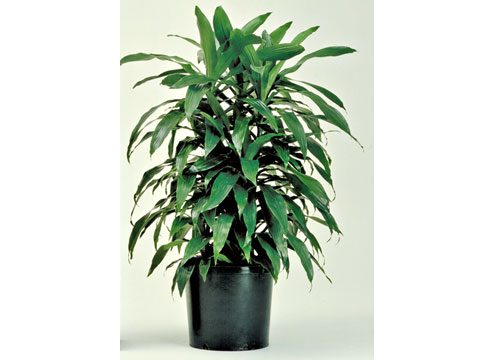Houseplants and Air Care Readers Digest