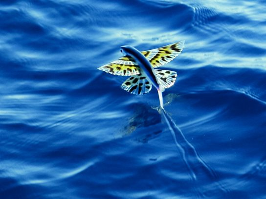 Flying fish dating site