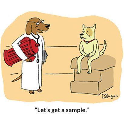 Image result for dog cartoons