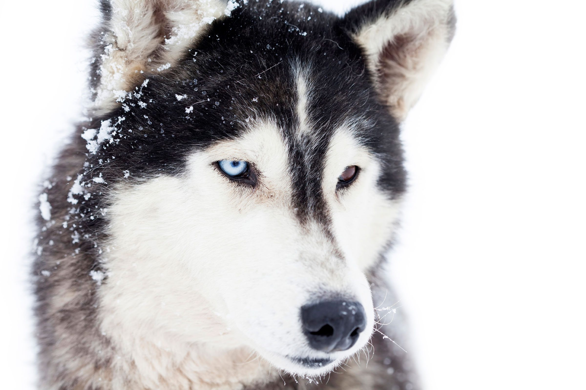 ... Dog Breeds Types Of Dog Breeds Husky Dog Breeds Just Dog Breeds Small