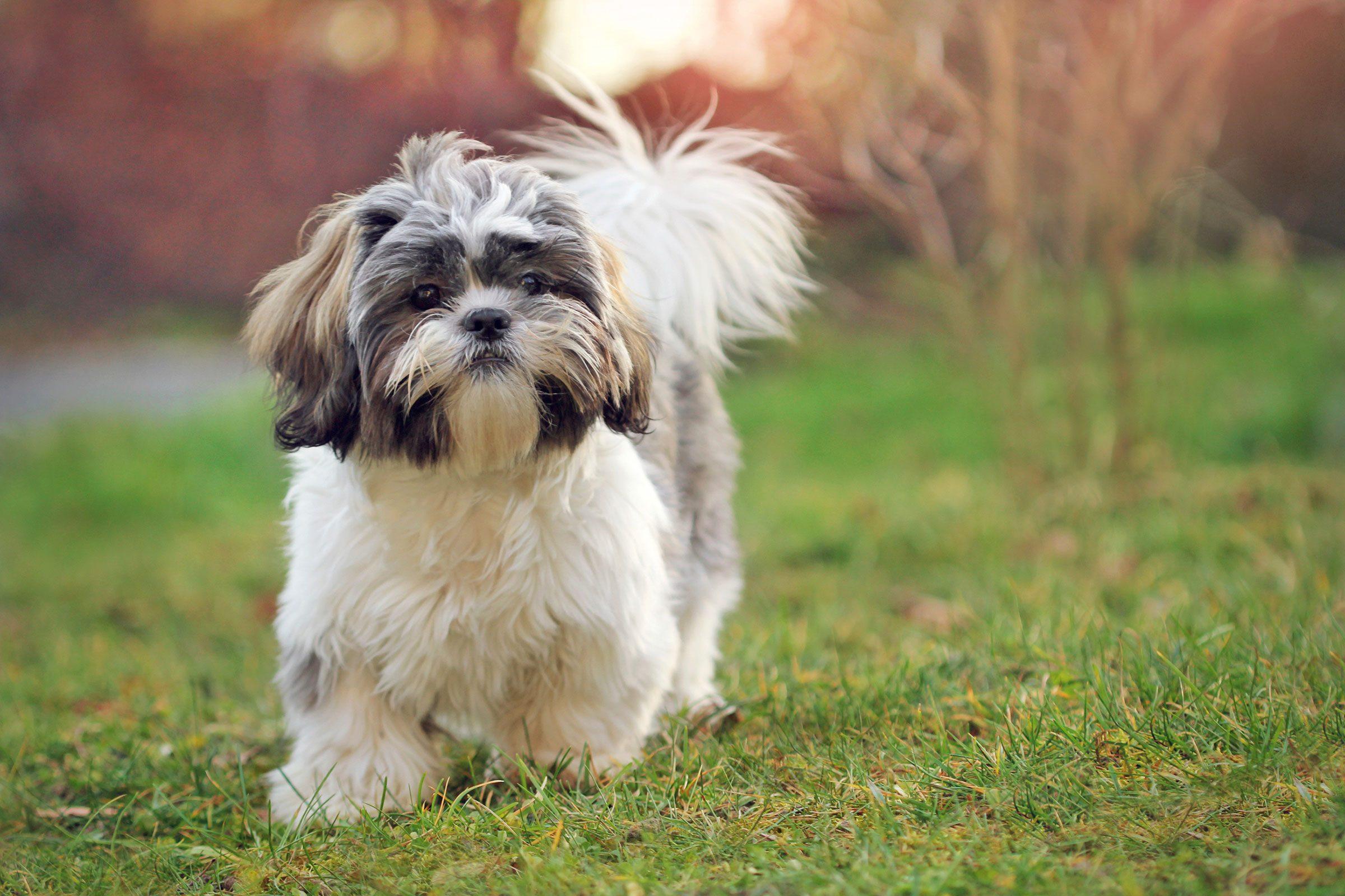 Dog registration papers written in german?