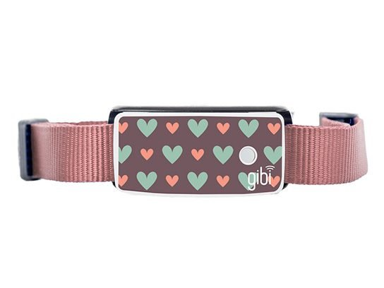 Best Valentine Day gift for your pooch