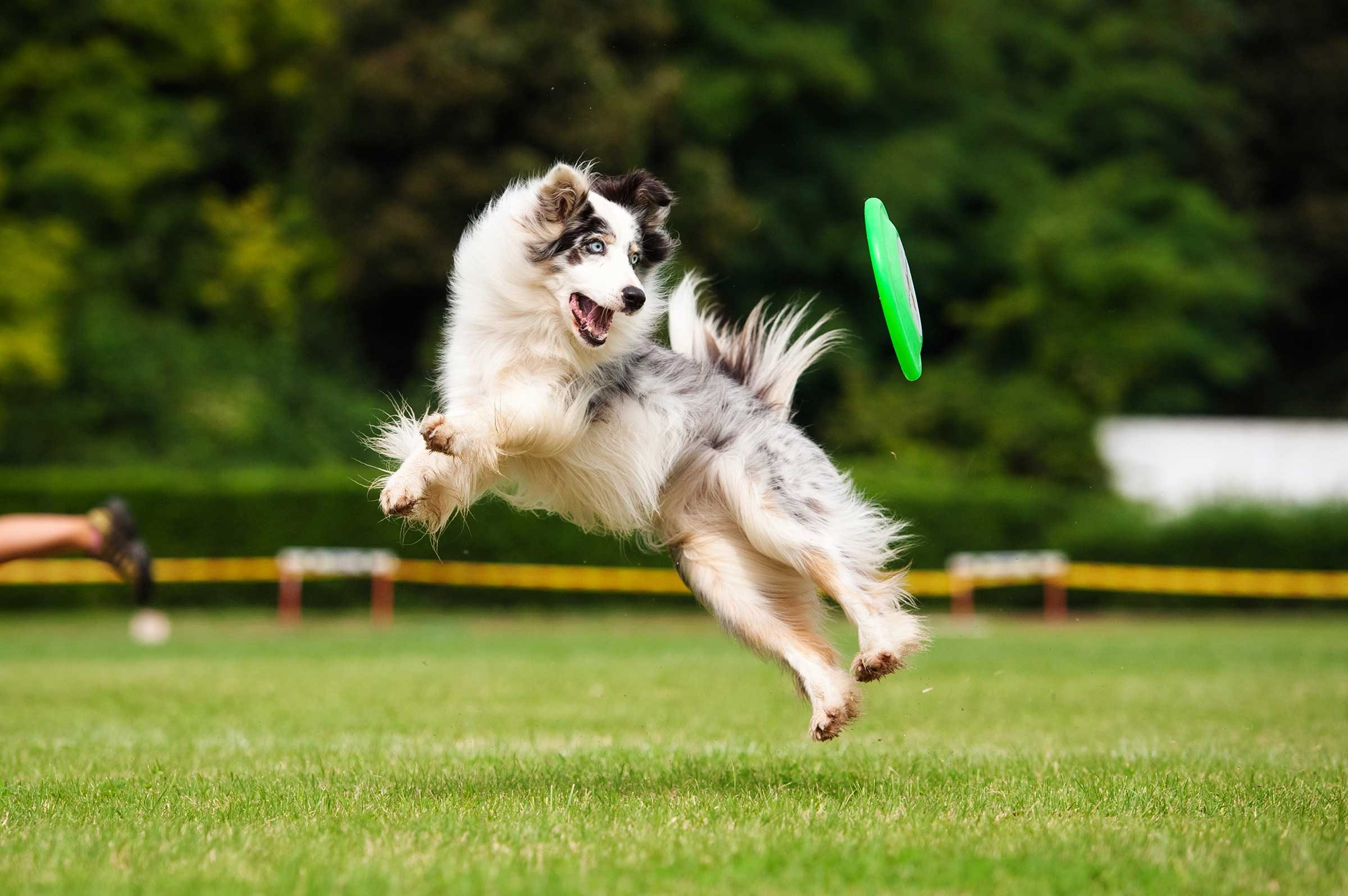 I Love To Fetch And Would Like To Learn How To Catch A Flying Disc