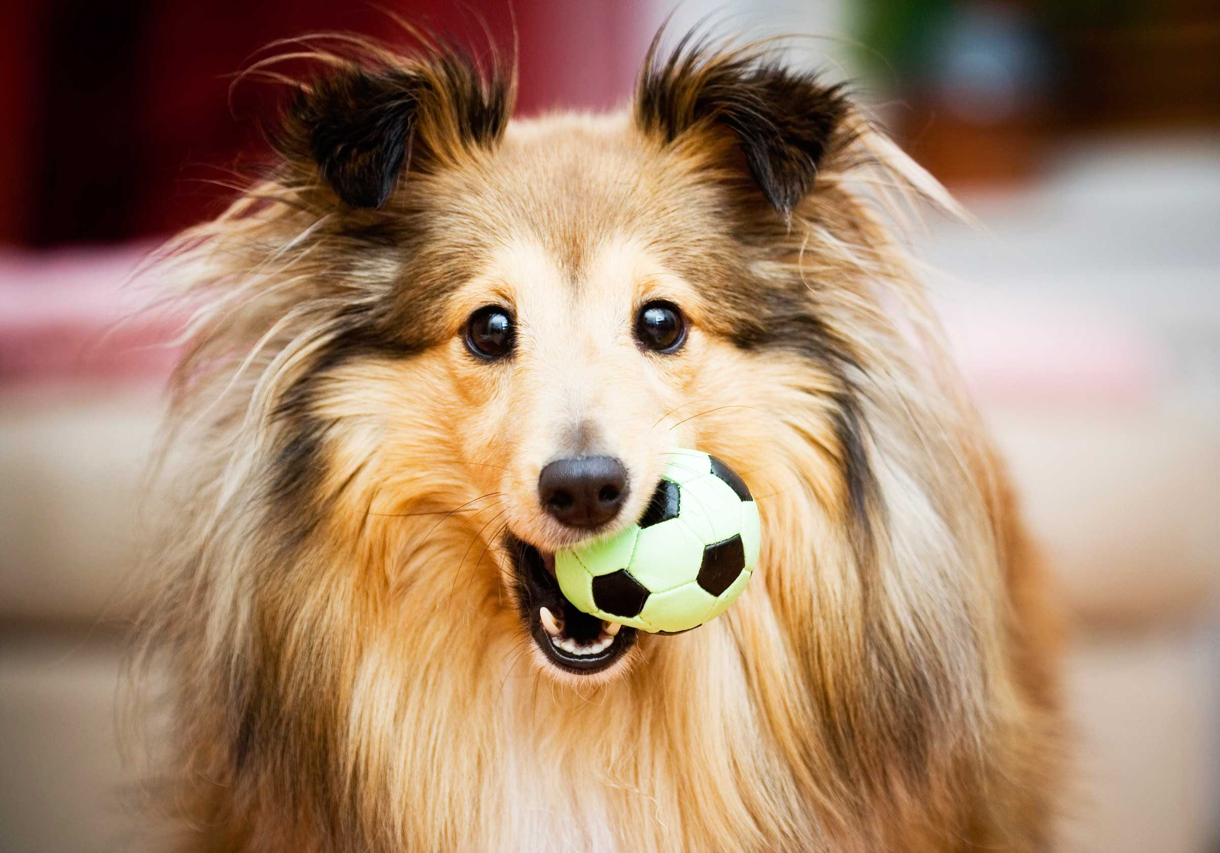 When I Bark, Jump, And Grab The Towel Off The Countertop