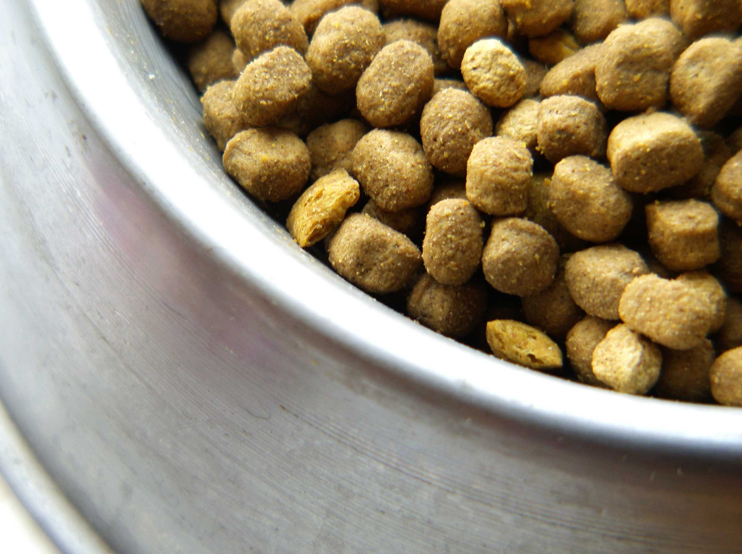 Did You Hear The Hype About Grainfree Cat And Dog Food?