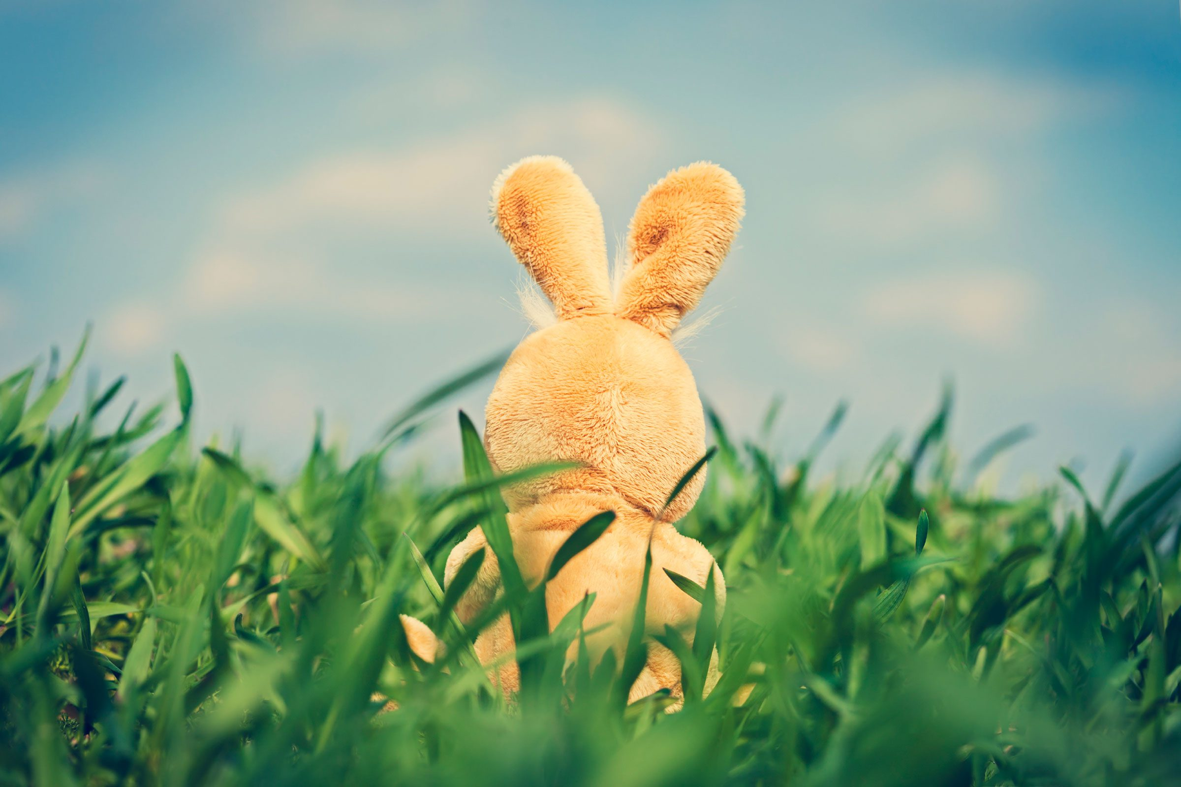 the easter bunny When you think of easter, you might think of chocolate, egg hunts, and the easter bunny but easter celebrates the resurrection of jesus what does the easter bunny.