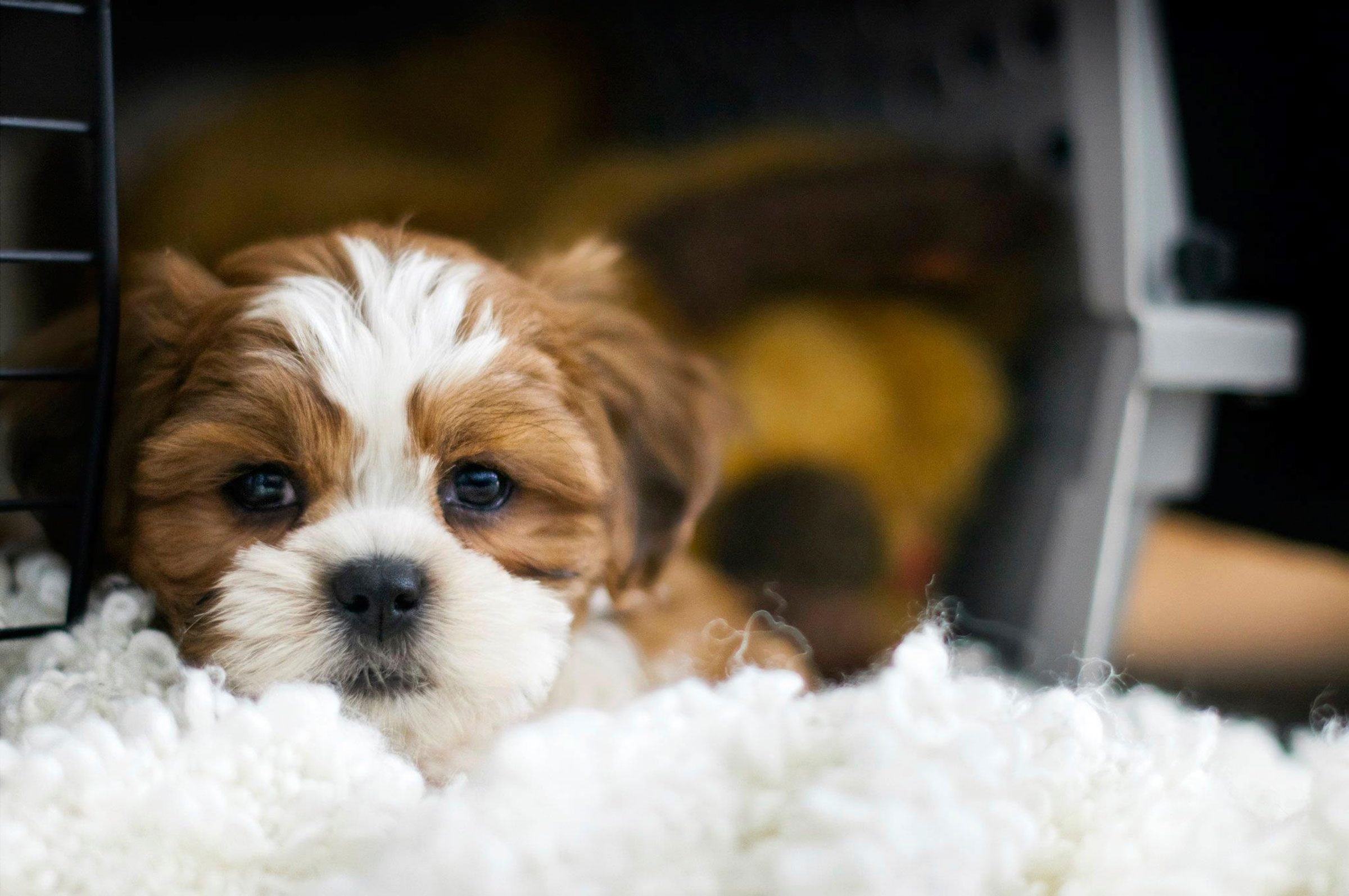 how to train your puppy Learn all about training your pet, including puppy training, dog obedience training and cat training and behavior.