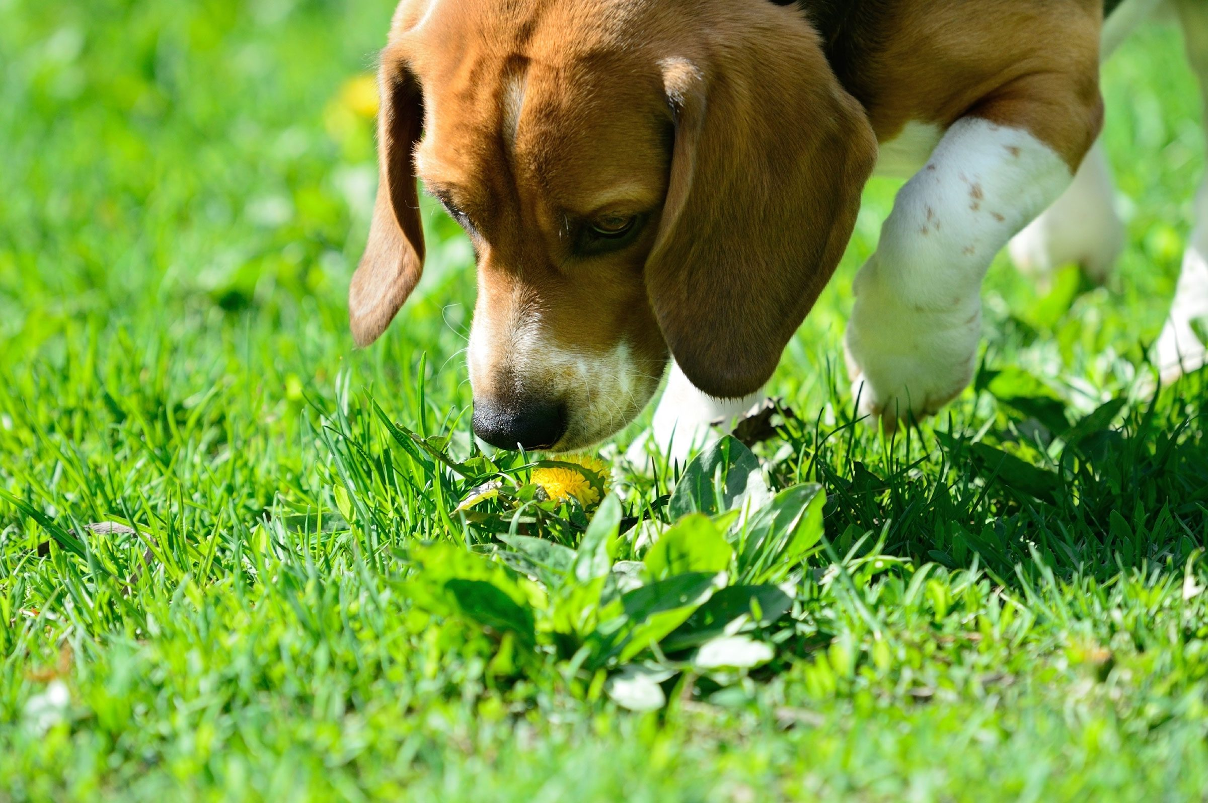 How To Train Your Puppy 5 Things To Train First Reader 39 S Digest