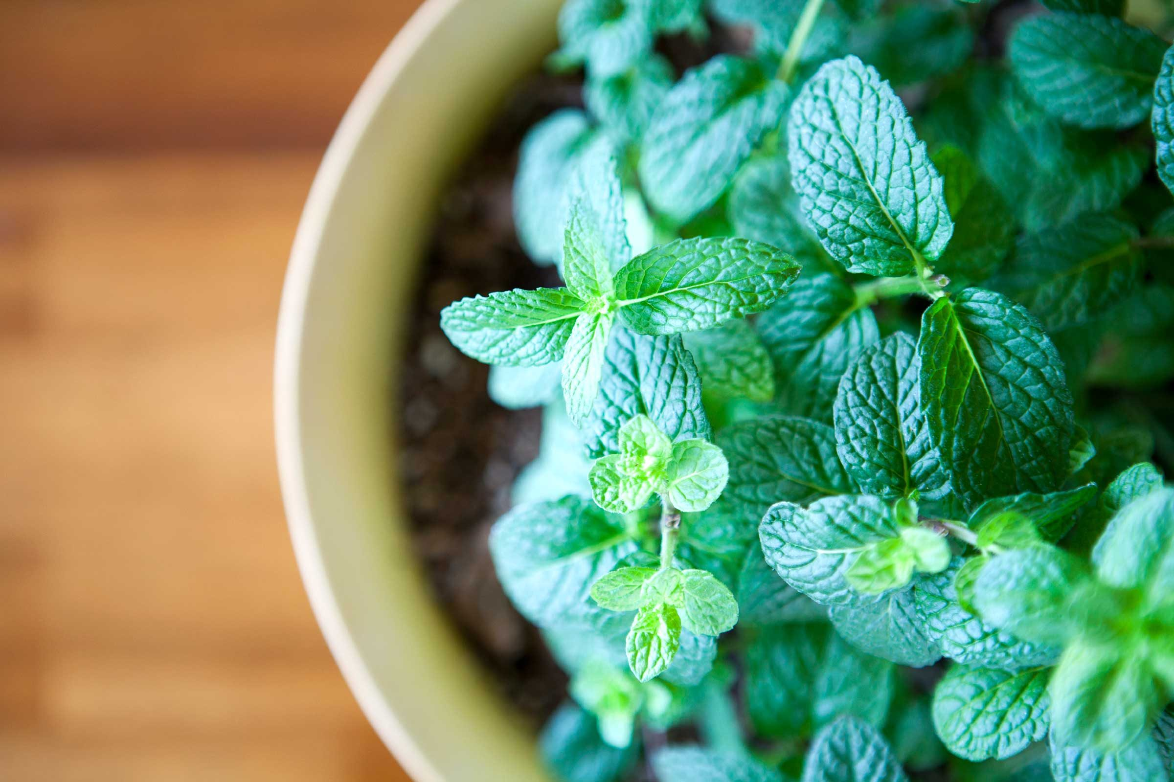 Try ant-repellent herbs