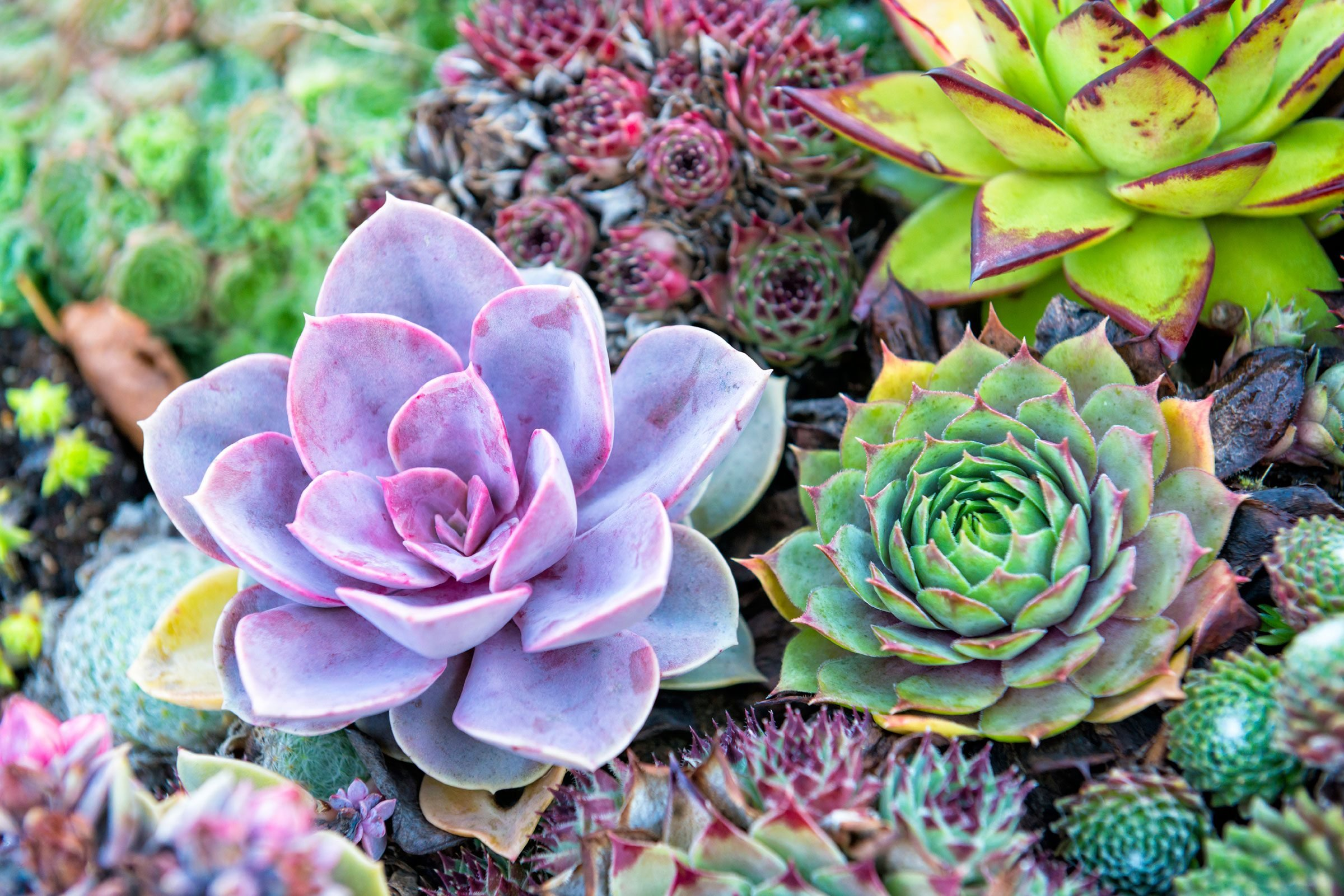 easy cheap flower arrangements upgrade supermarket flowers reader 39 s digest. Black Bedroom Furniture Sets. Home Design Ideas