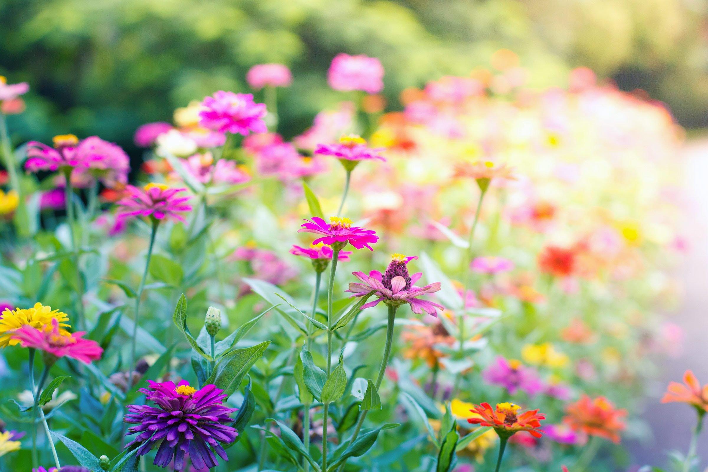 grow a butterfly garden 8 easy tips reader u0027s digest