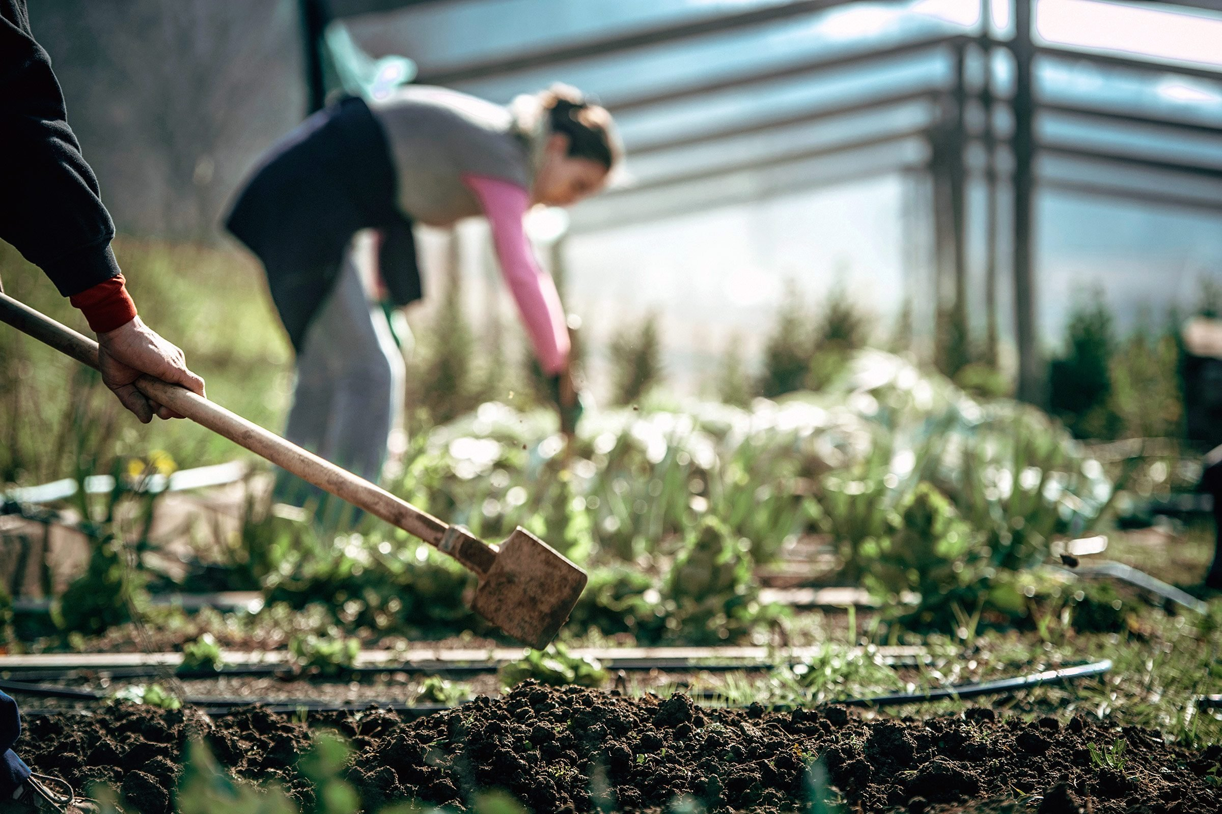 Weeds in flower beds organic killer - Let The Sun Help You