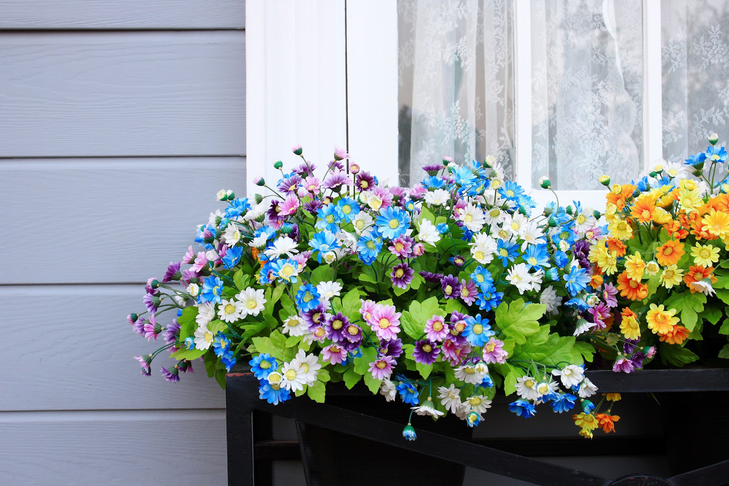 Flower Window Baskets : Annual flowers how to make them thrive reader s digest