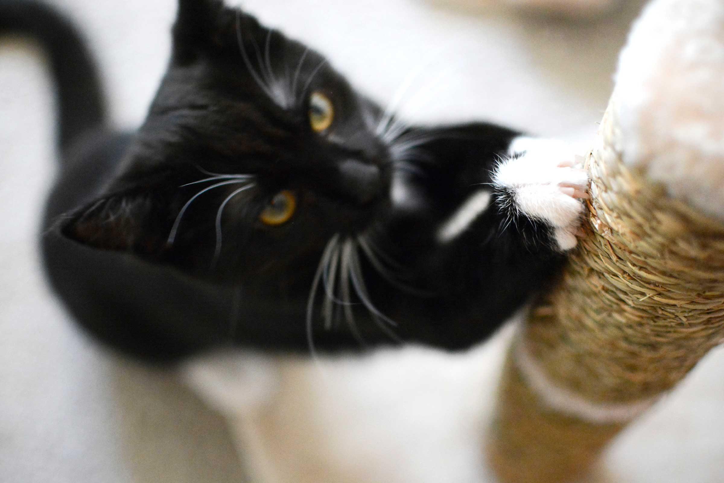 I am cat ... let me scratch