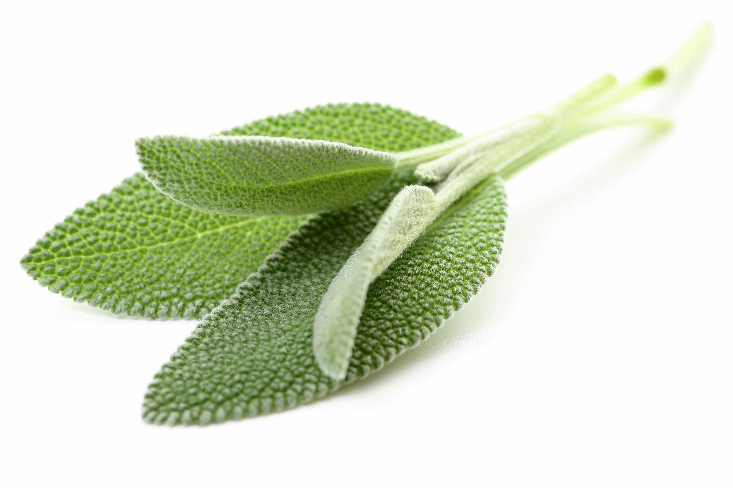 Sore throat remedy: Sage and water