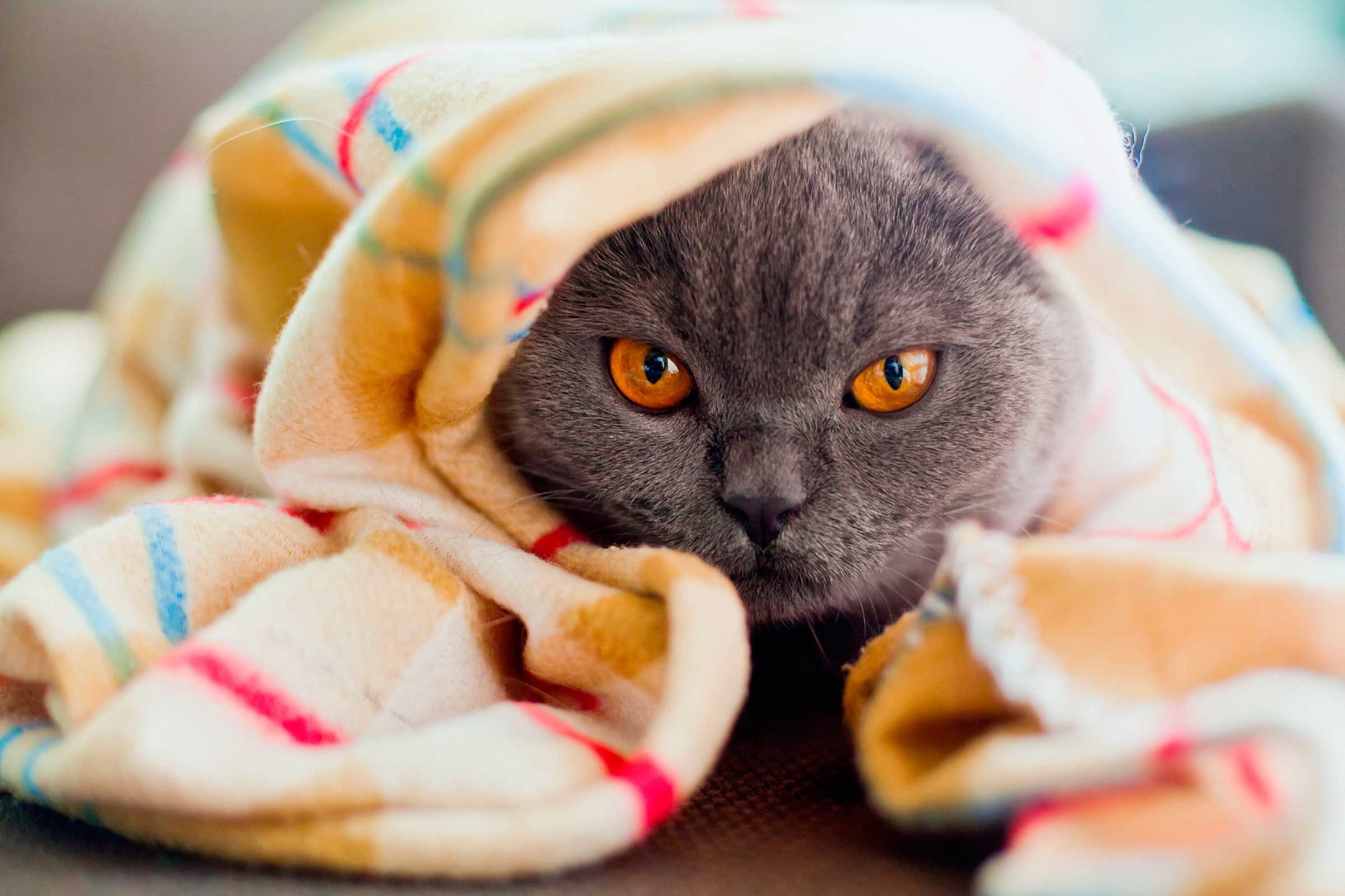 Can Cats Sense When You Re Sick