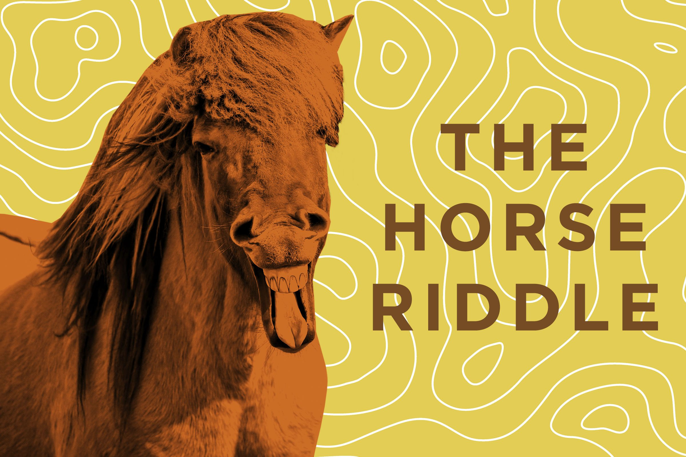 Funny Horse Jokes Reader S Digest