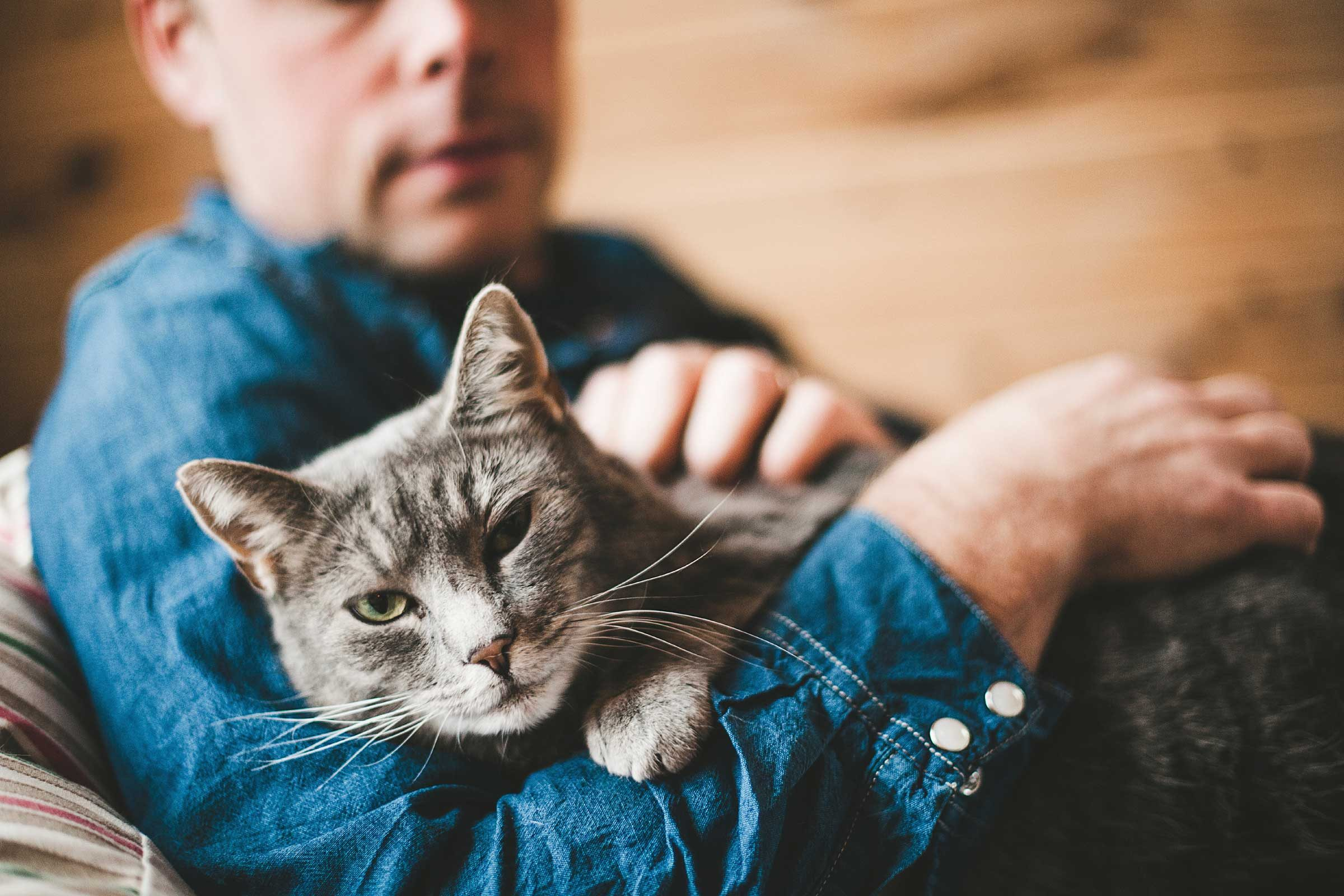 Many cats like to live according to the 'Seinfeld' mantra of 'no hugging, no learning'