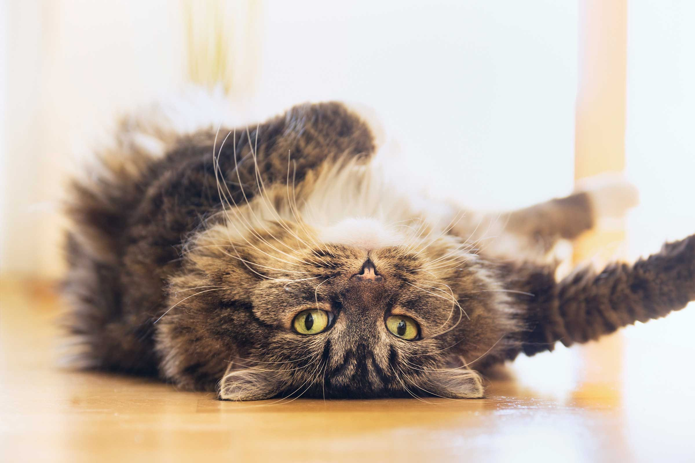 pictures How to Teach Your Kitten to Be Calm and Relaxed