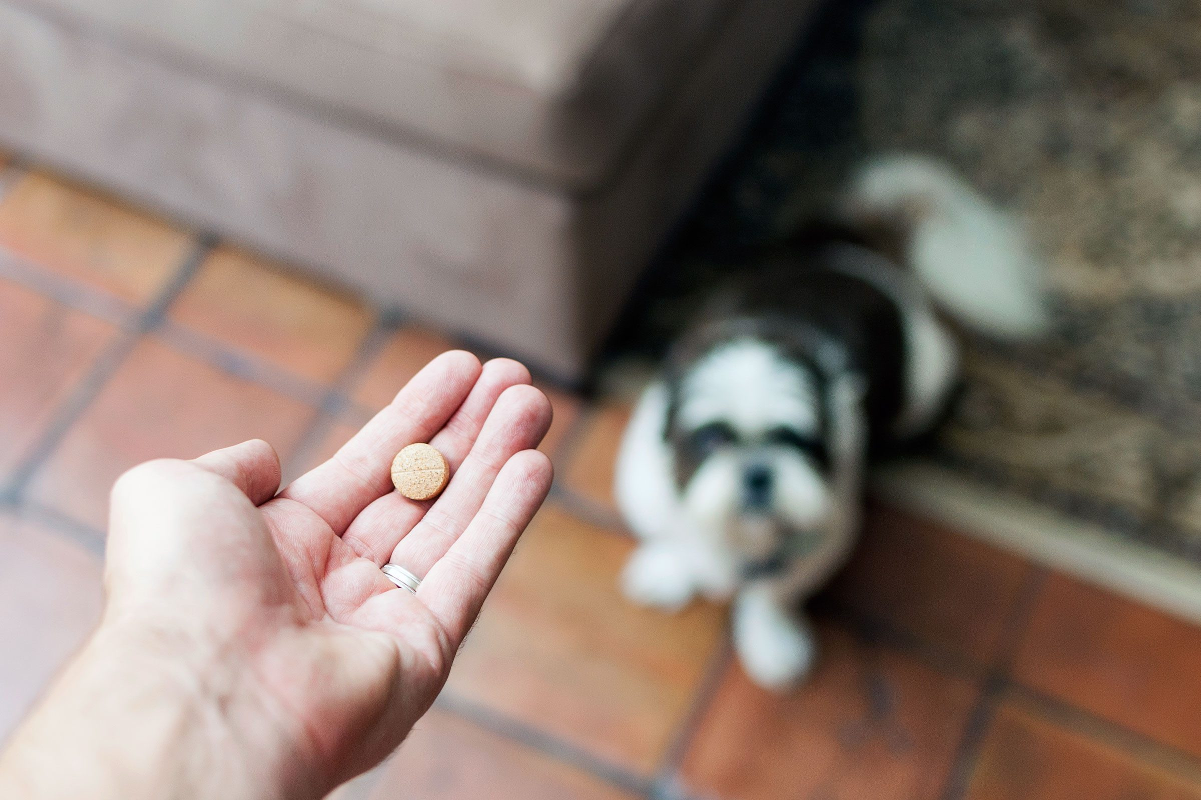 Some veterinary drugs have a generic version that's made for humans