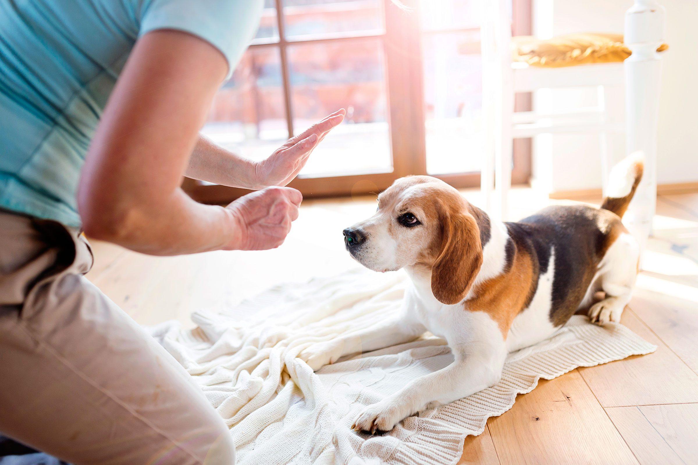 how to make your dog do tricks