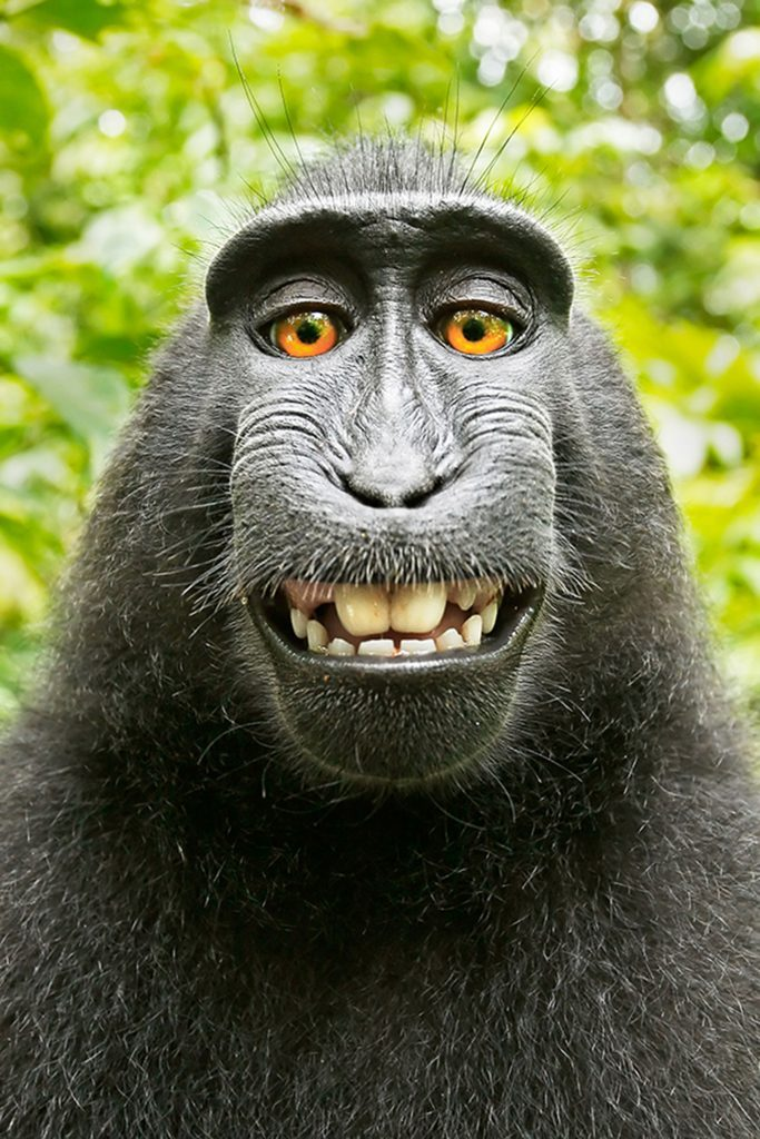 may 2016 YBTJ monkey selfie