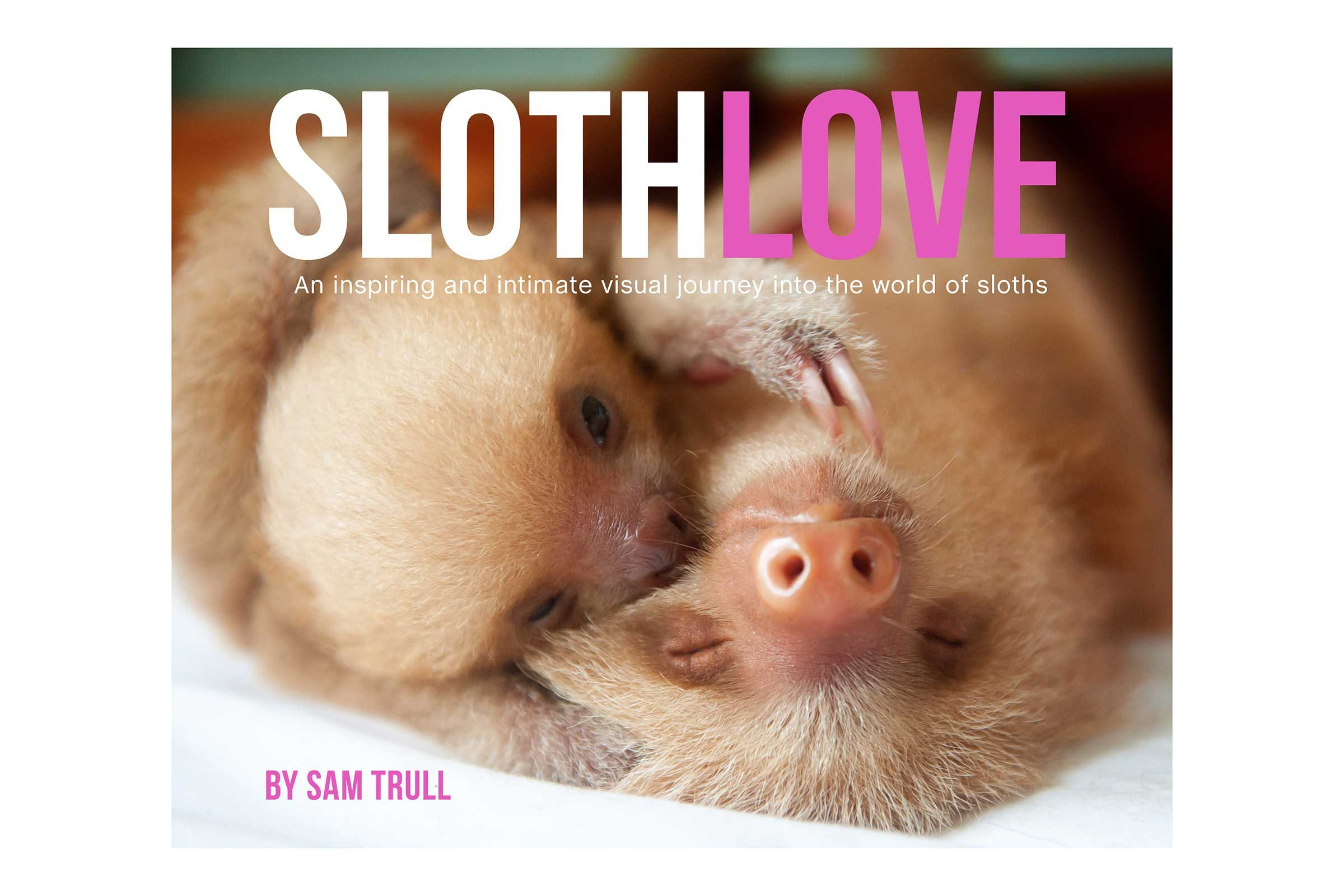 See more pictures of cute sloths