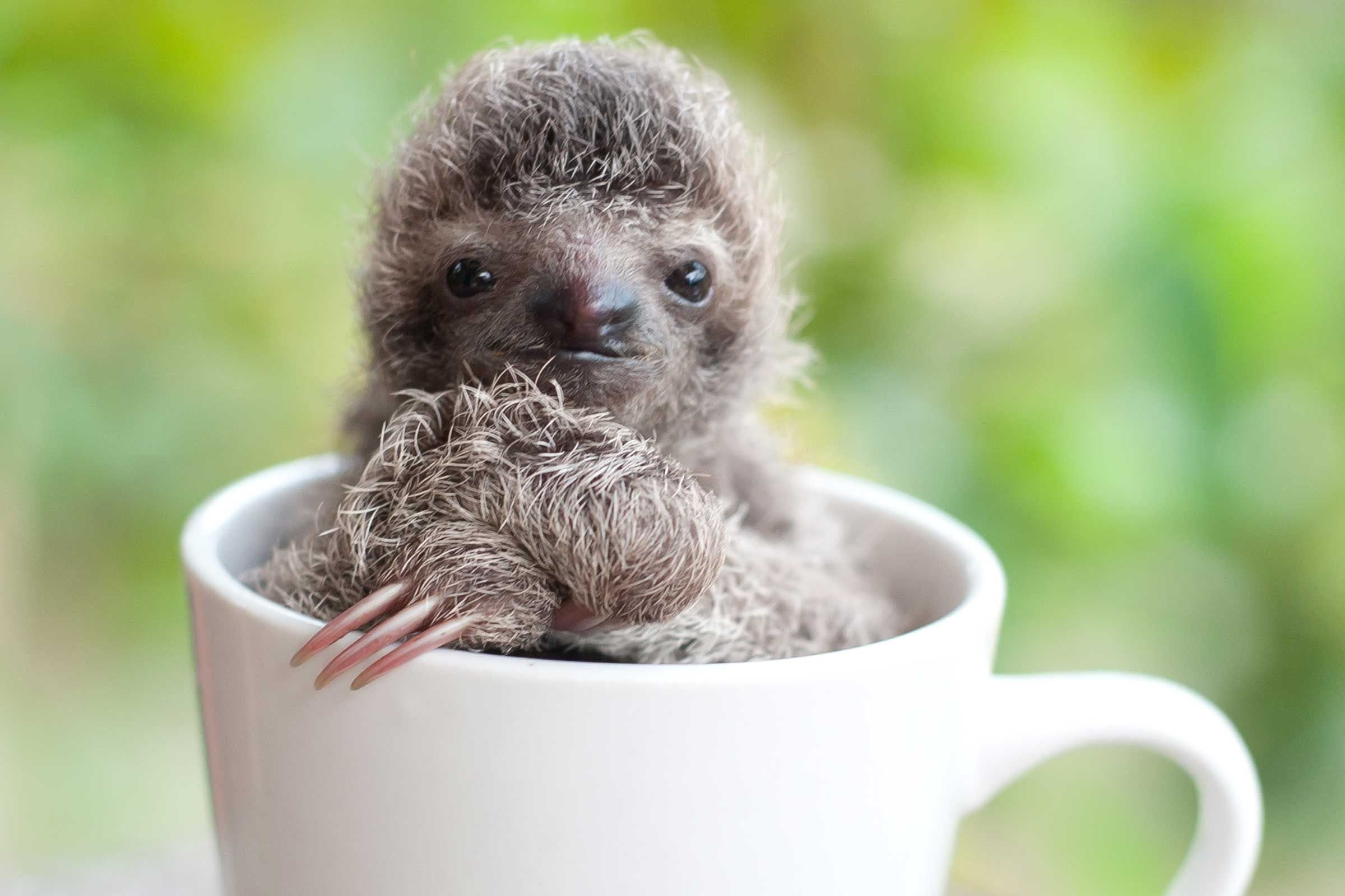 Sloth Pictures 50