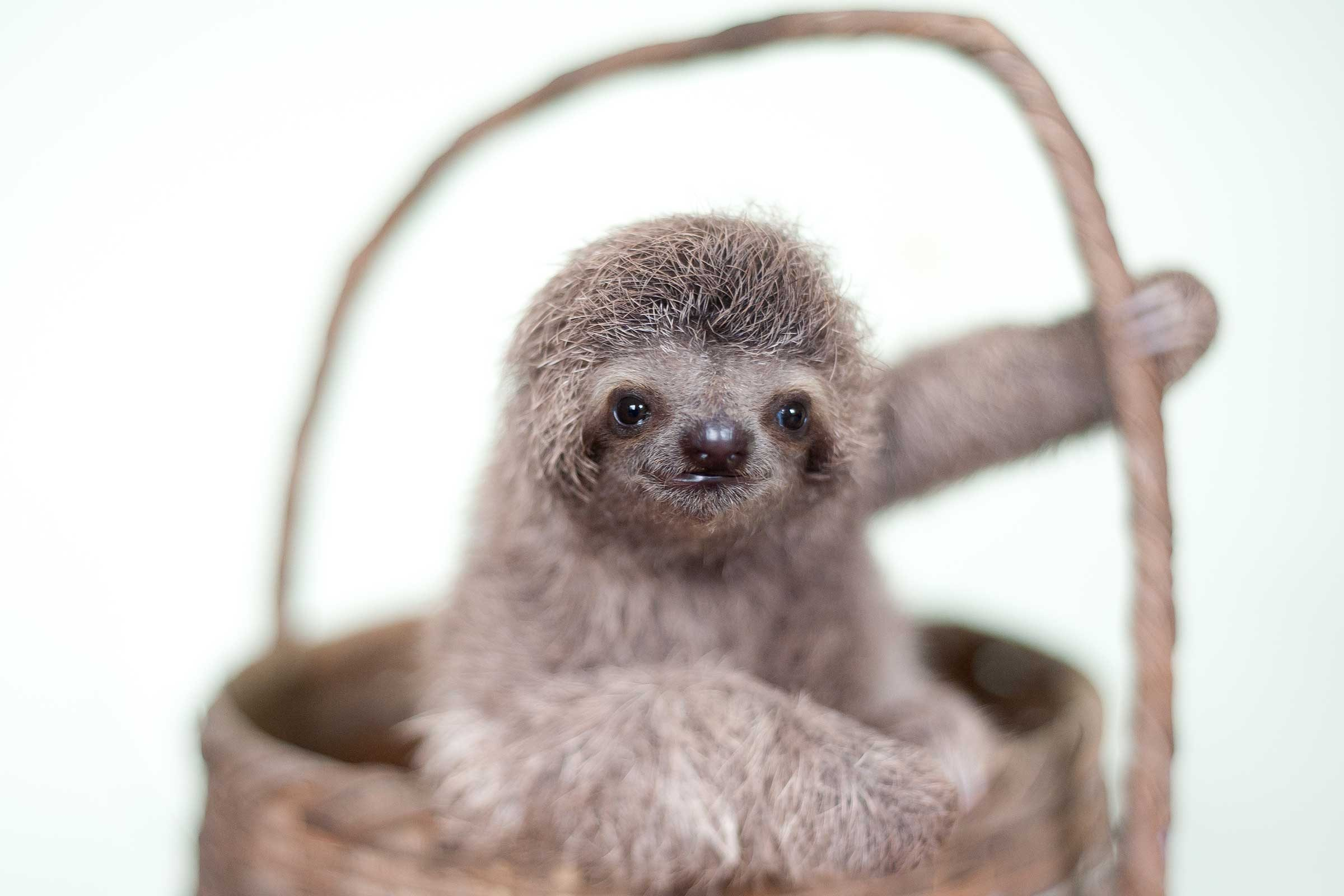 cute sloth pictures adorable photos of sloths reader u0027s digest