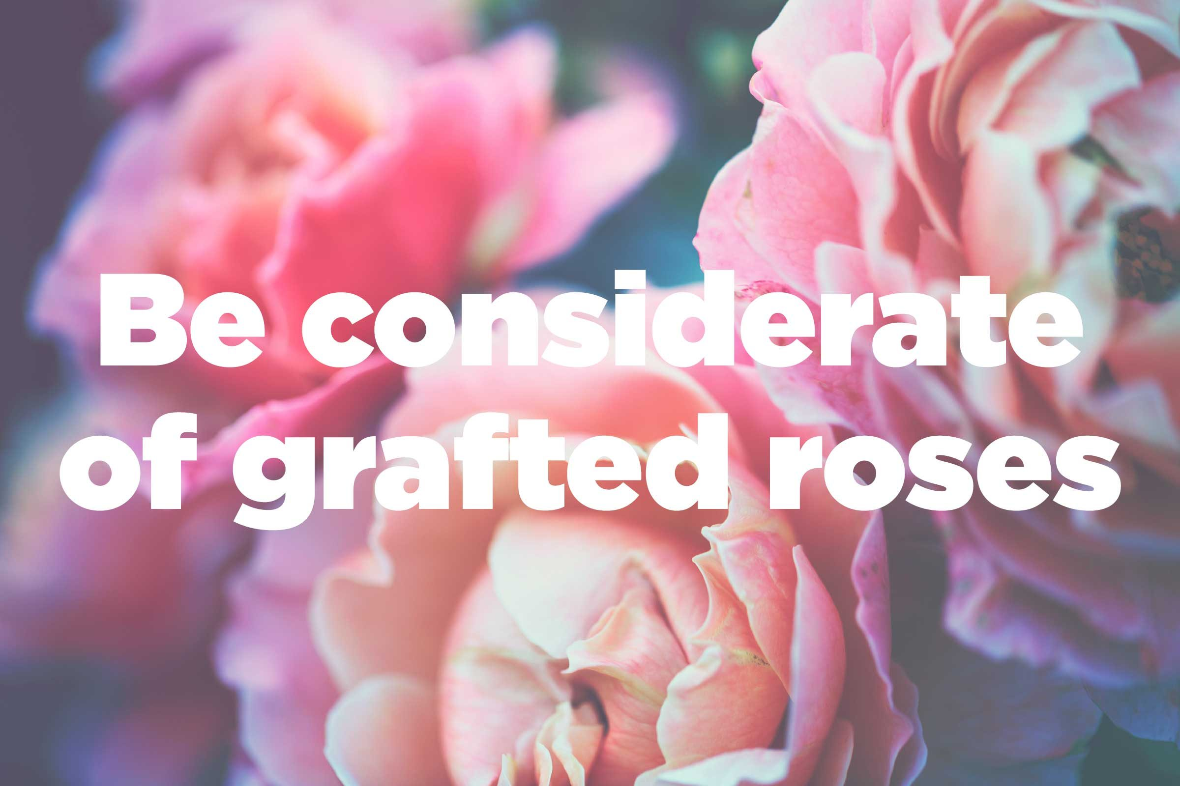 Growing Roses: Tips to Plant Beautiful Roses : Readeru0026#39;s Digest