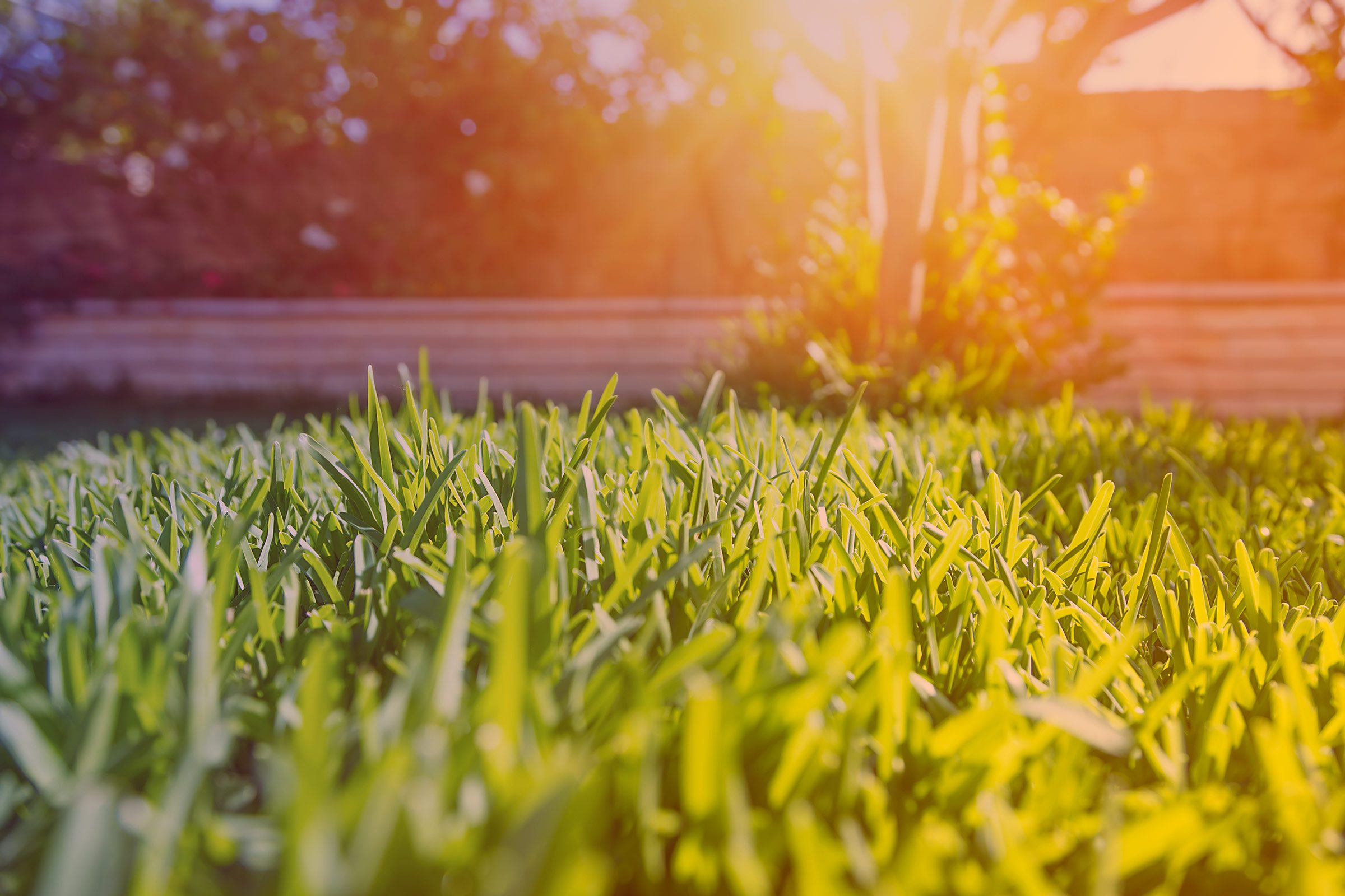 how to fix 9 common lawn problems