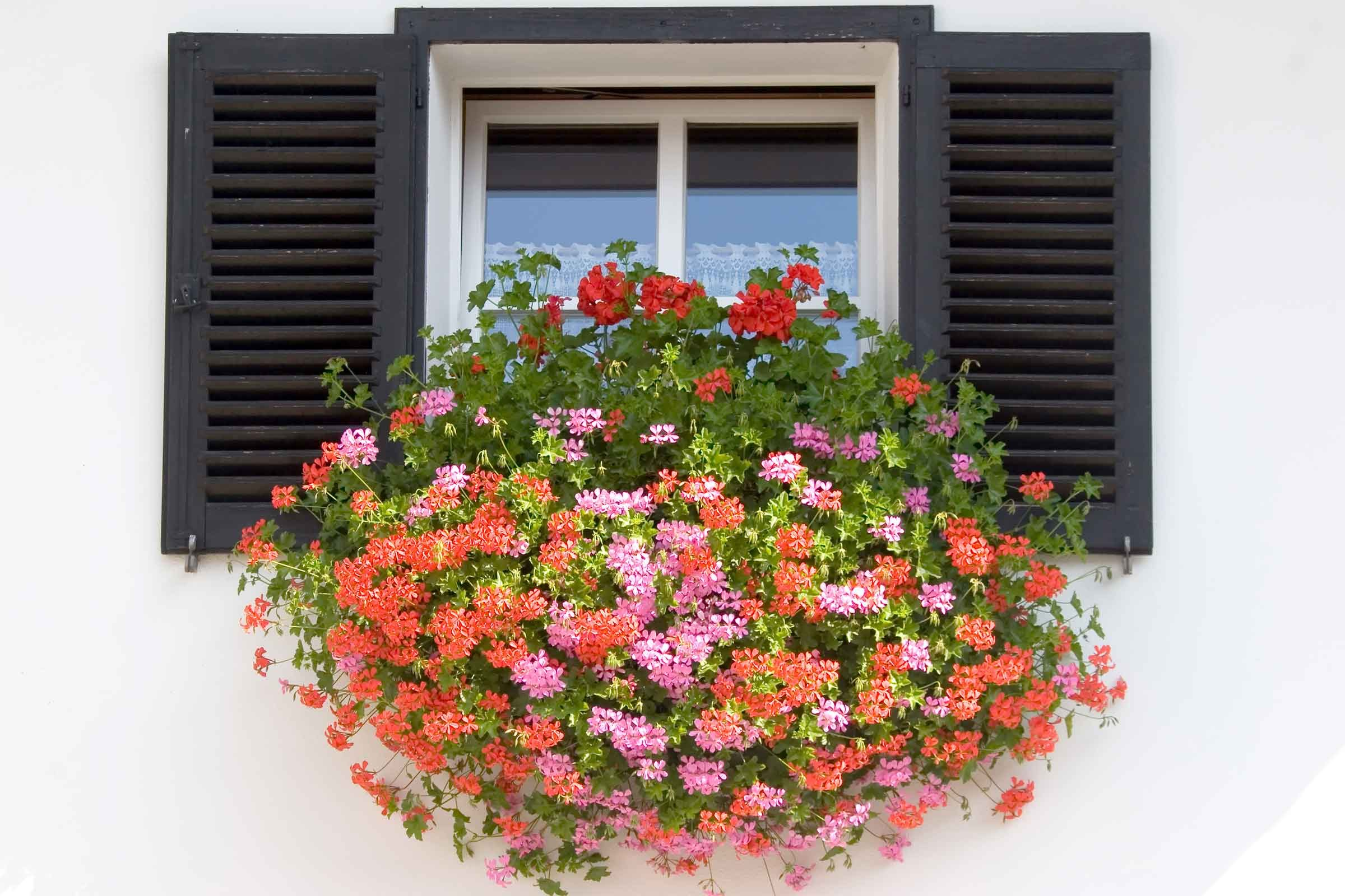 How to Plant Window Boxes 10 Simple Tips