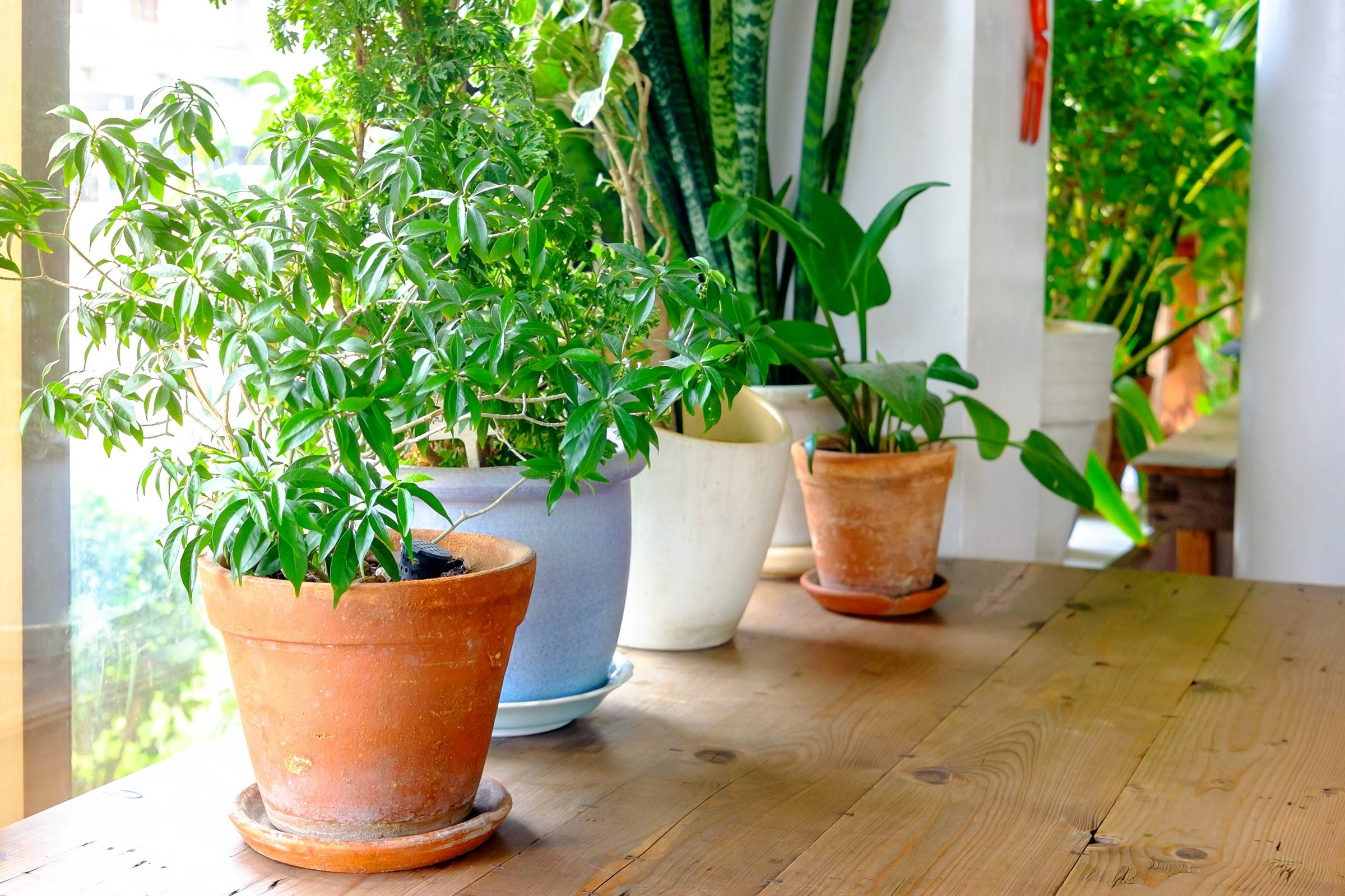 growing plants indoors: 29 tips for houseplants | reader's digest