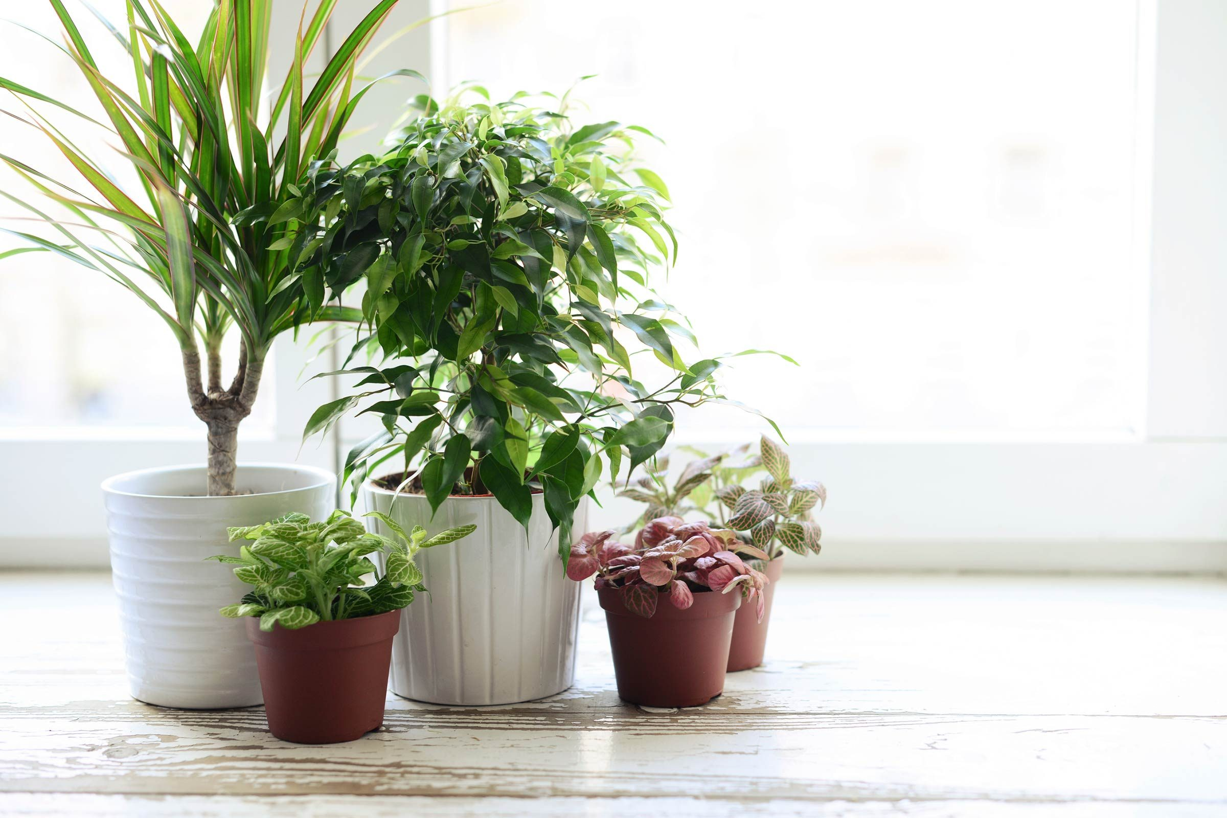 You dont have to repot big plants as often as small ones