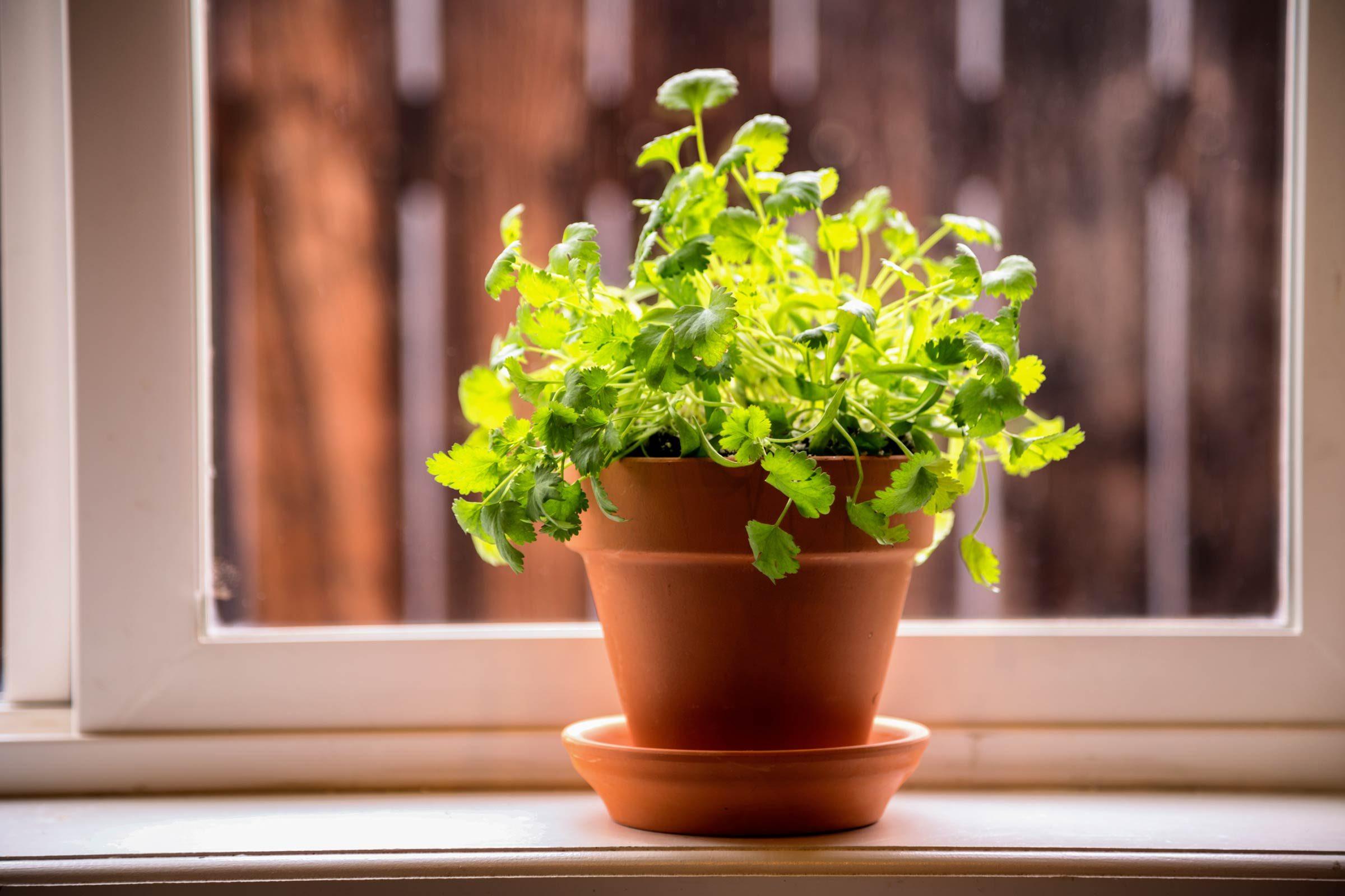 growing plants indoors 29 tips for houseplants reader u0027s digest