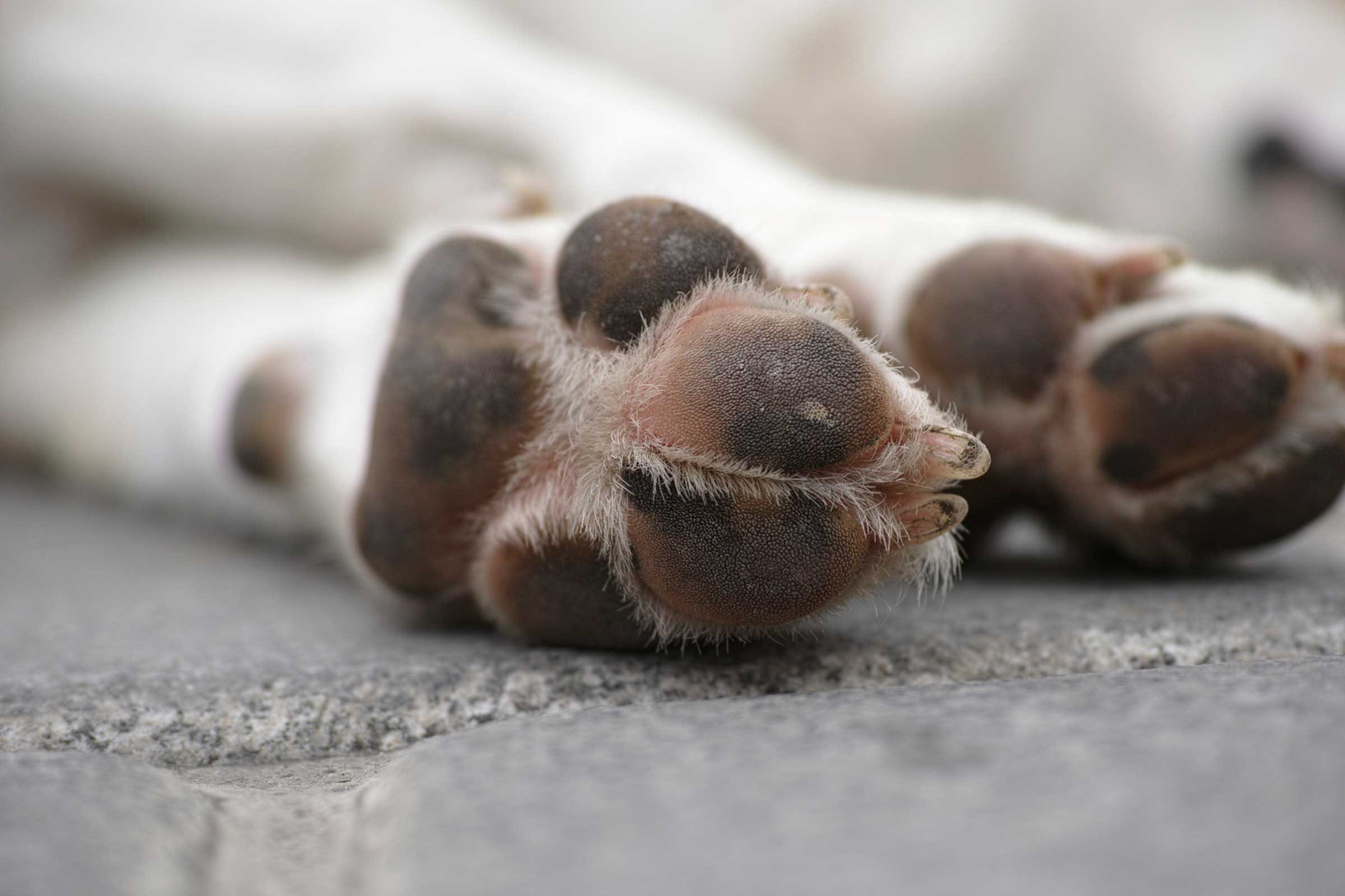 Your dog's feet might smell like corn.