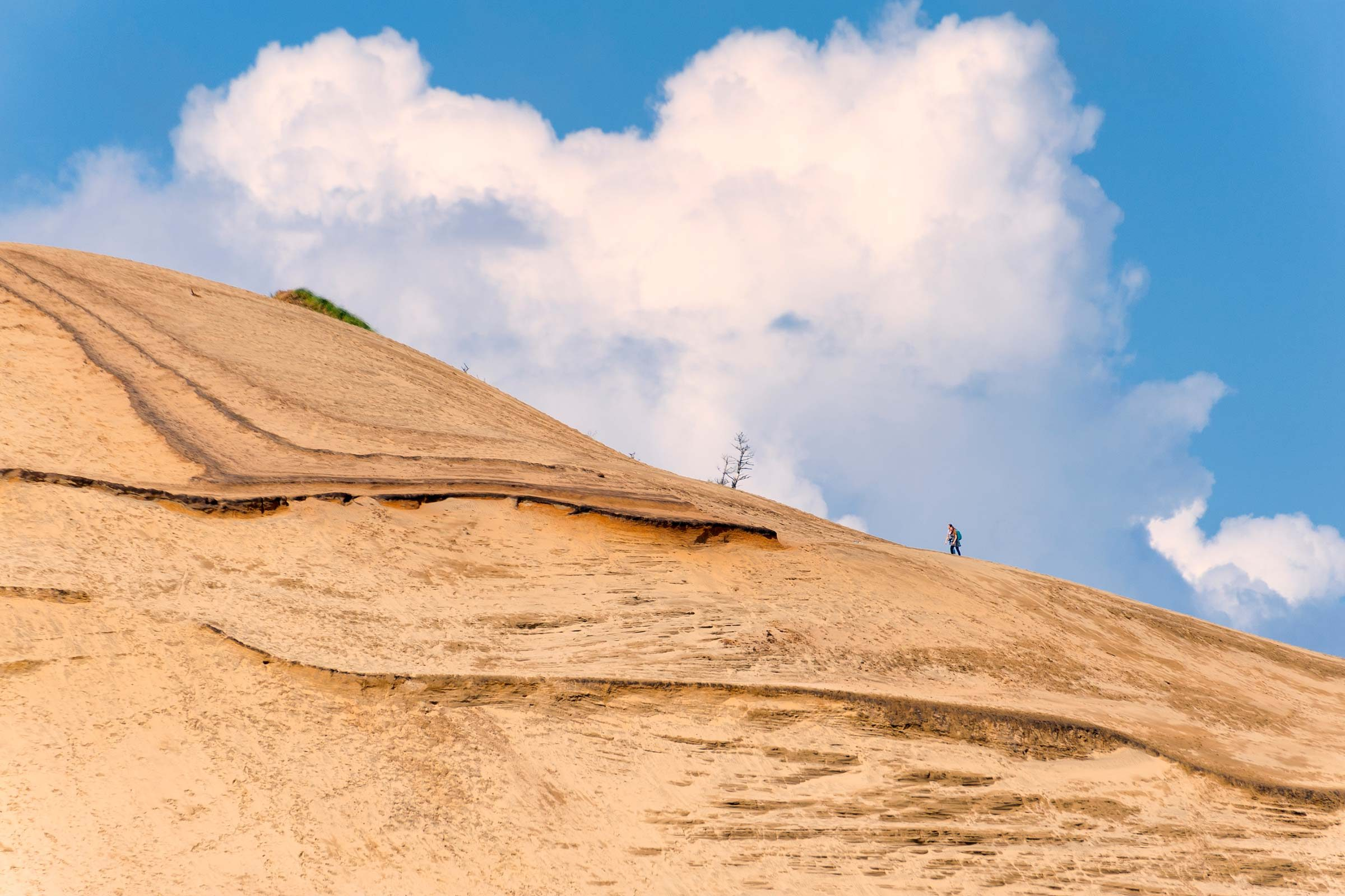 Surf Sand Dunes