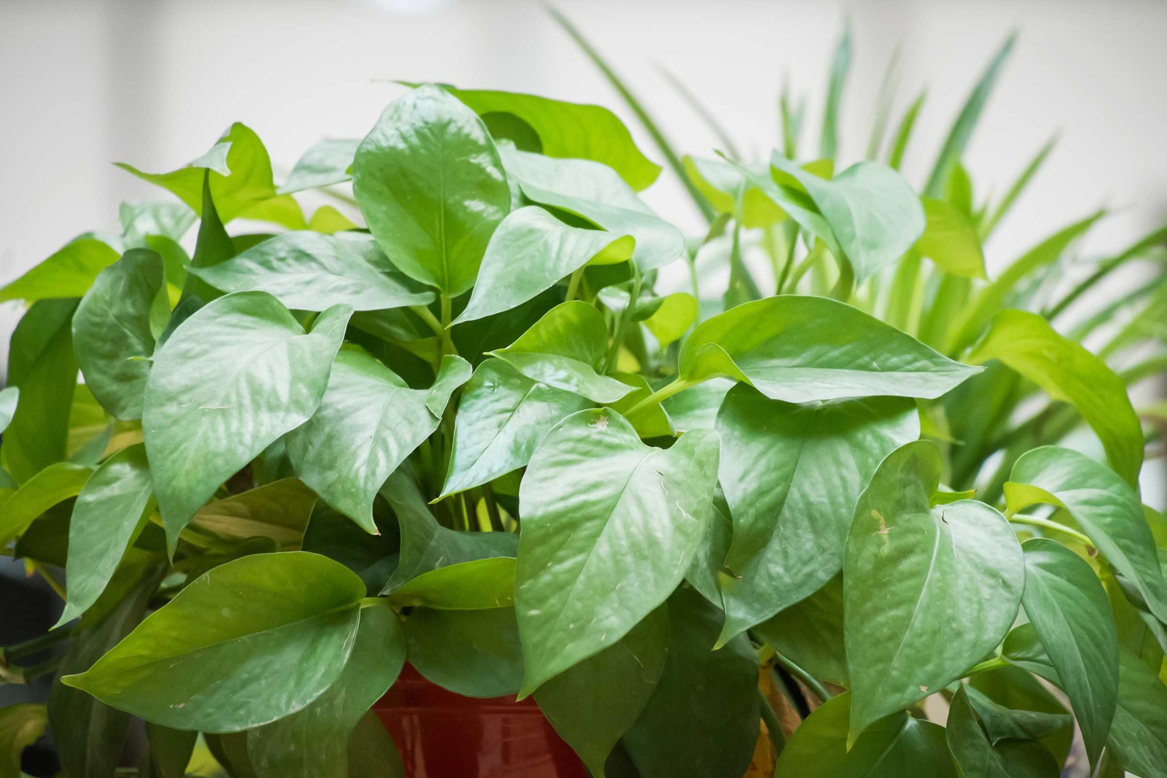 Brighten up houseplants