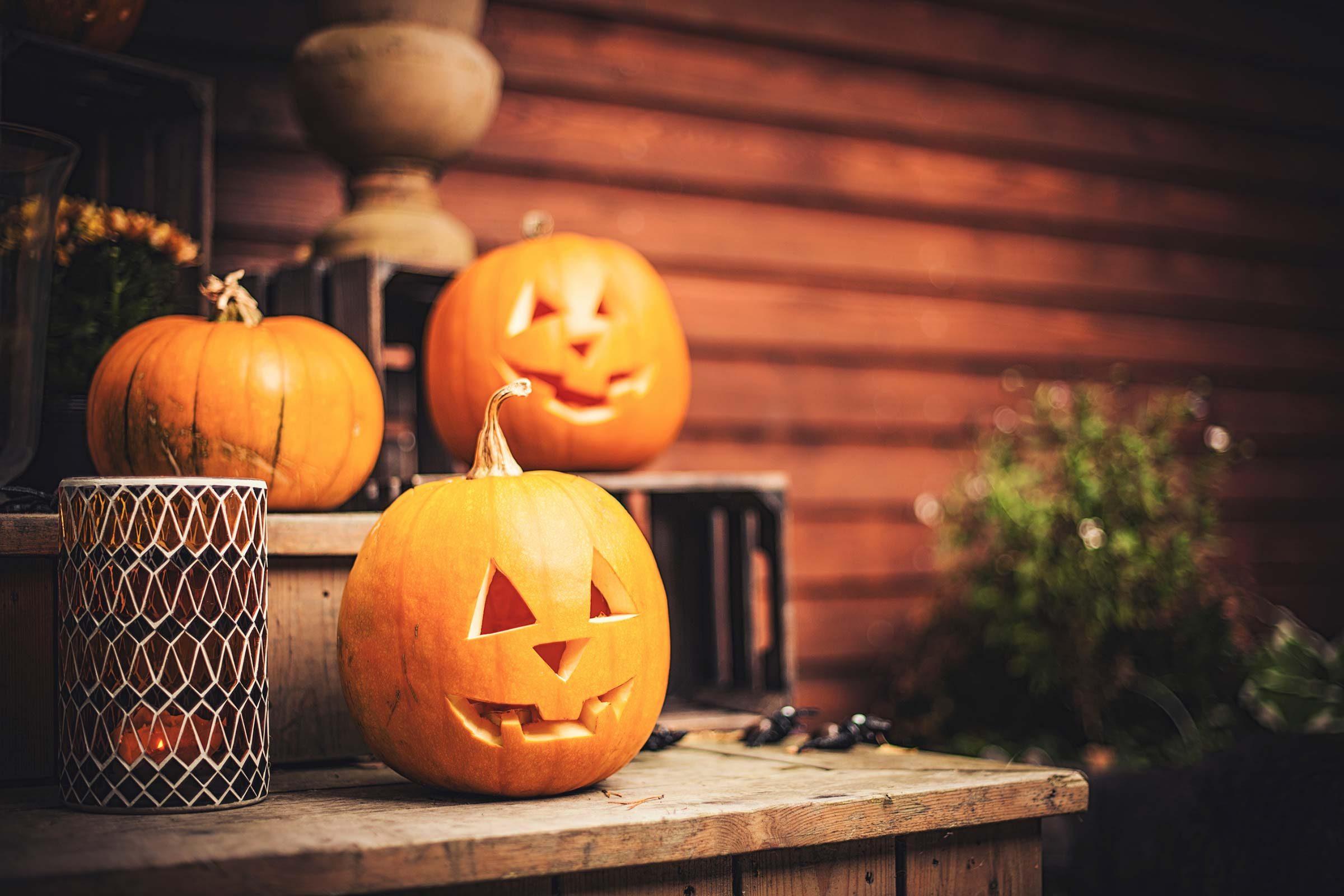 make sure halloween decorations are dog safe