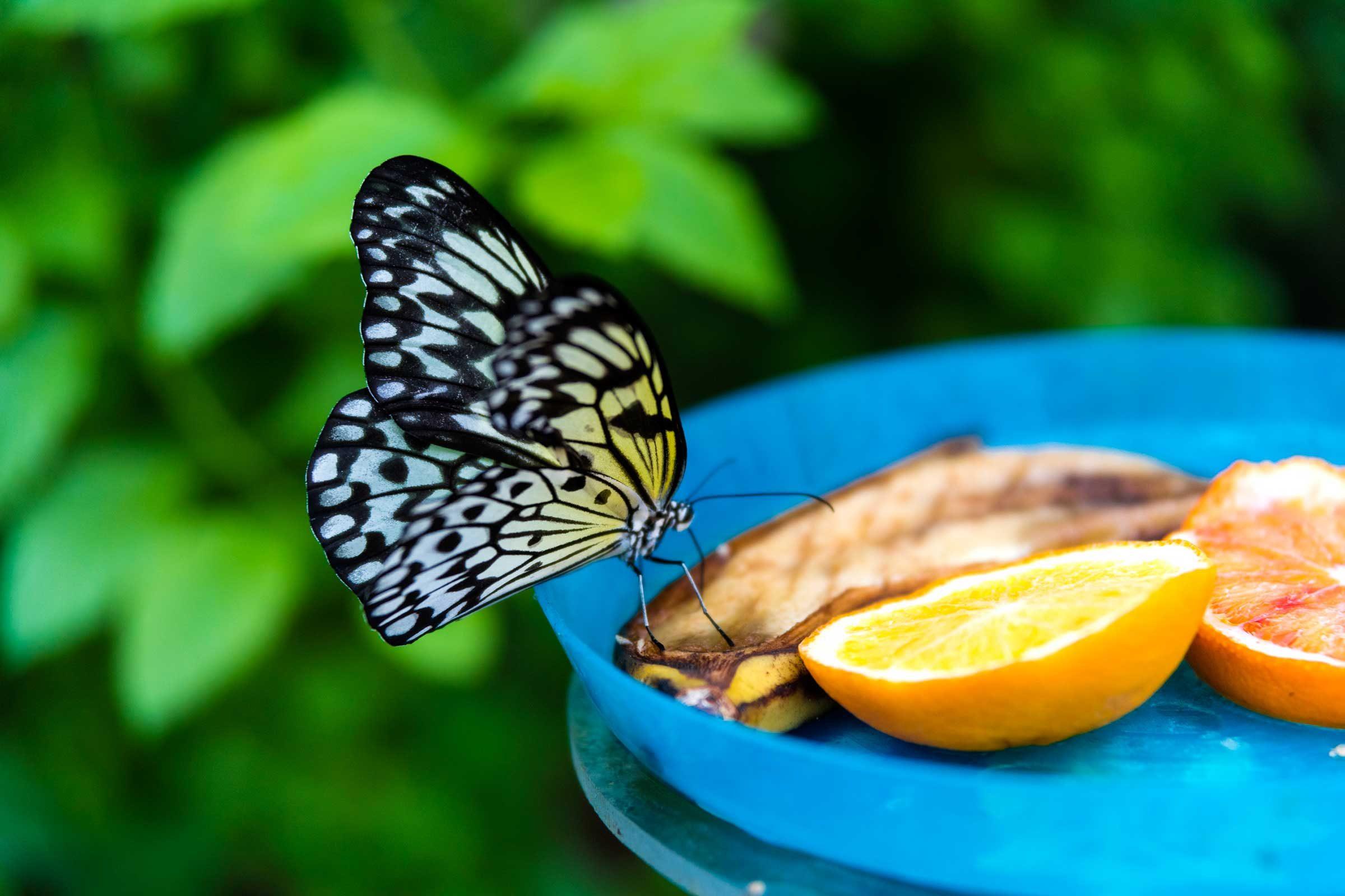 Attract butterflies and birds