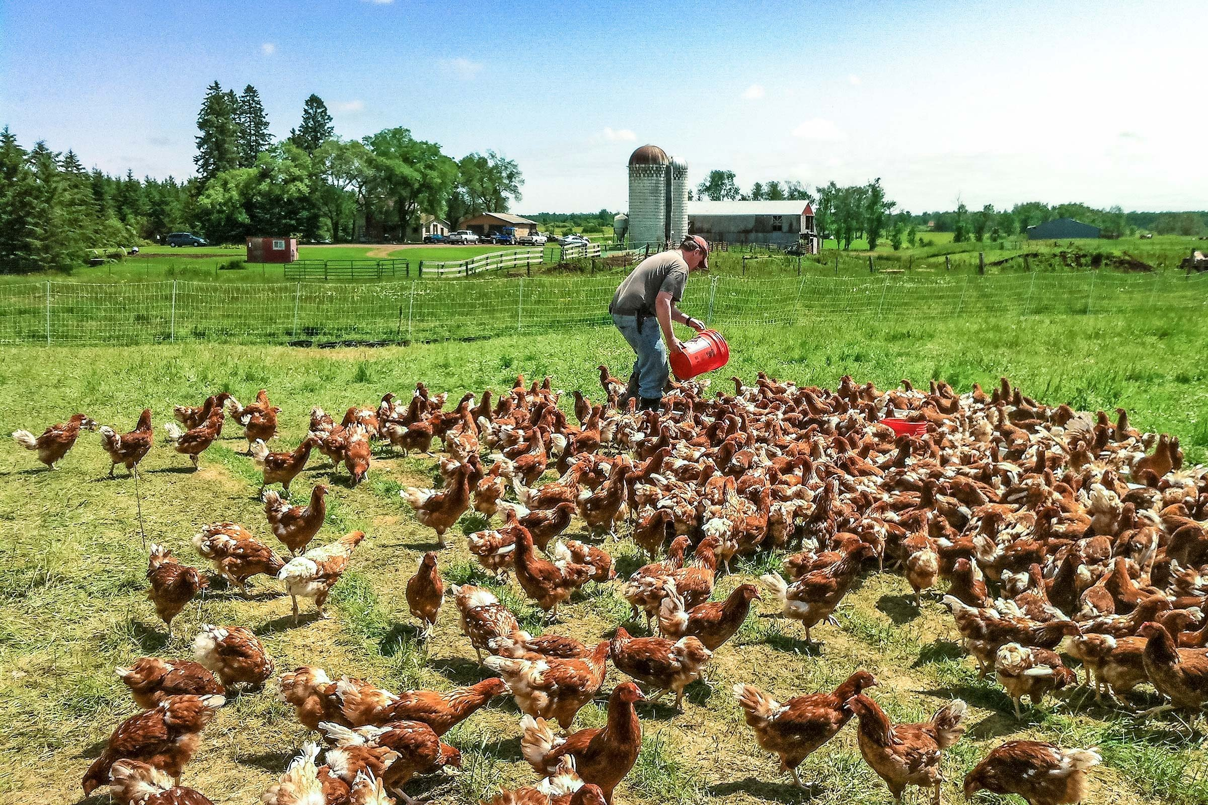 How Backyard Chicken Farmers Grew to Sell 7,000 Cartons a ...