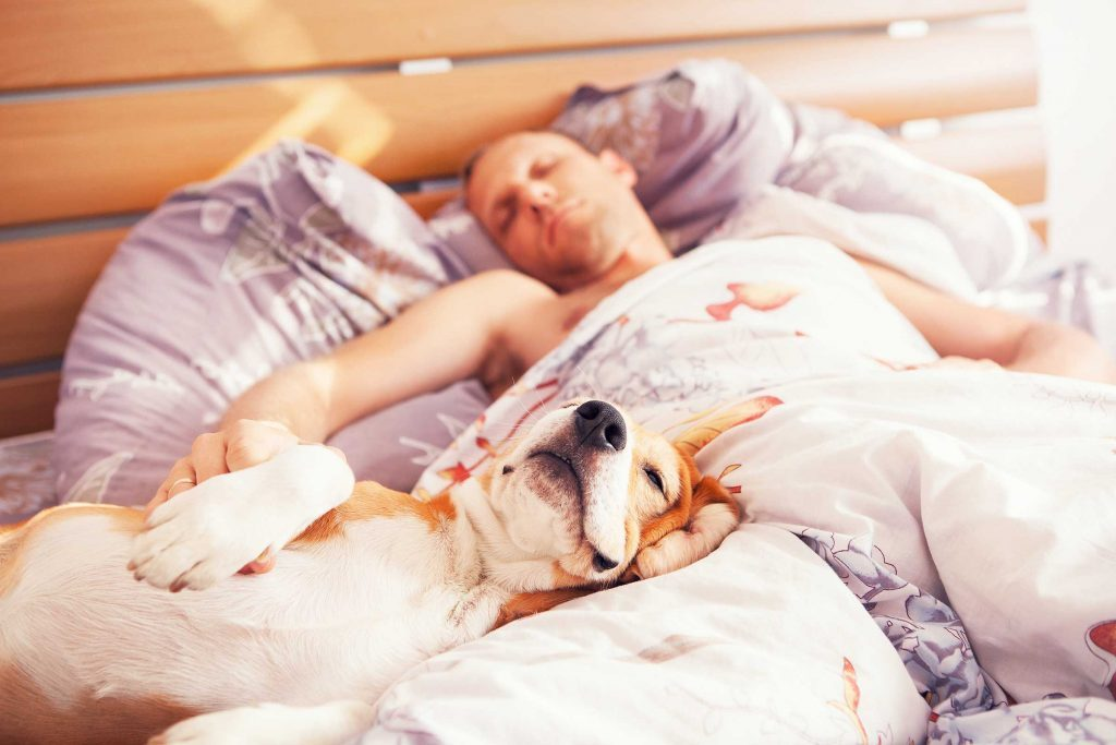Reader S Digest Signs Your Dog Trusts You